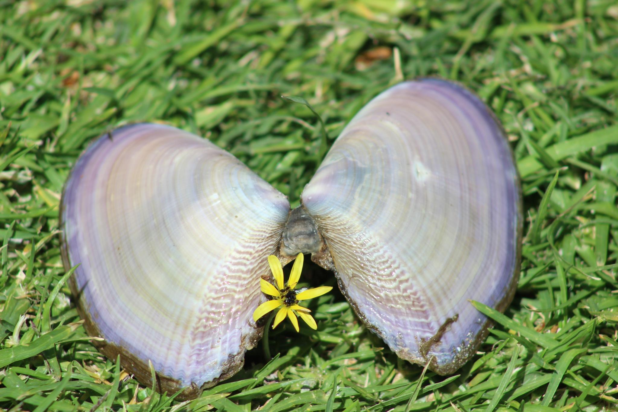 special seashell by Zorana Zee Grobbelaar