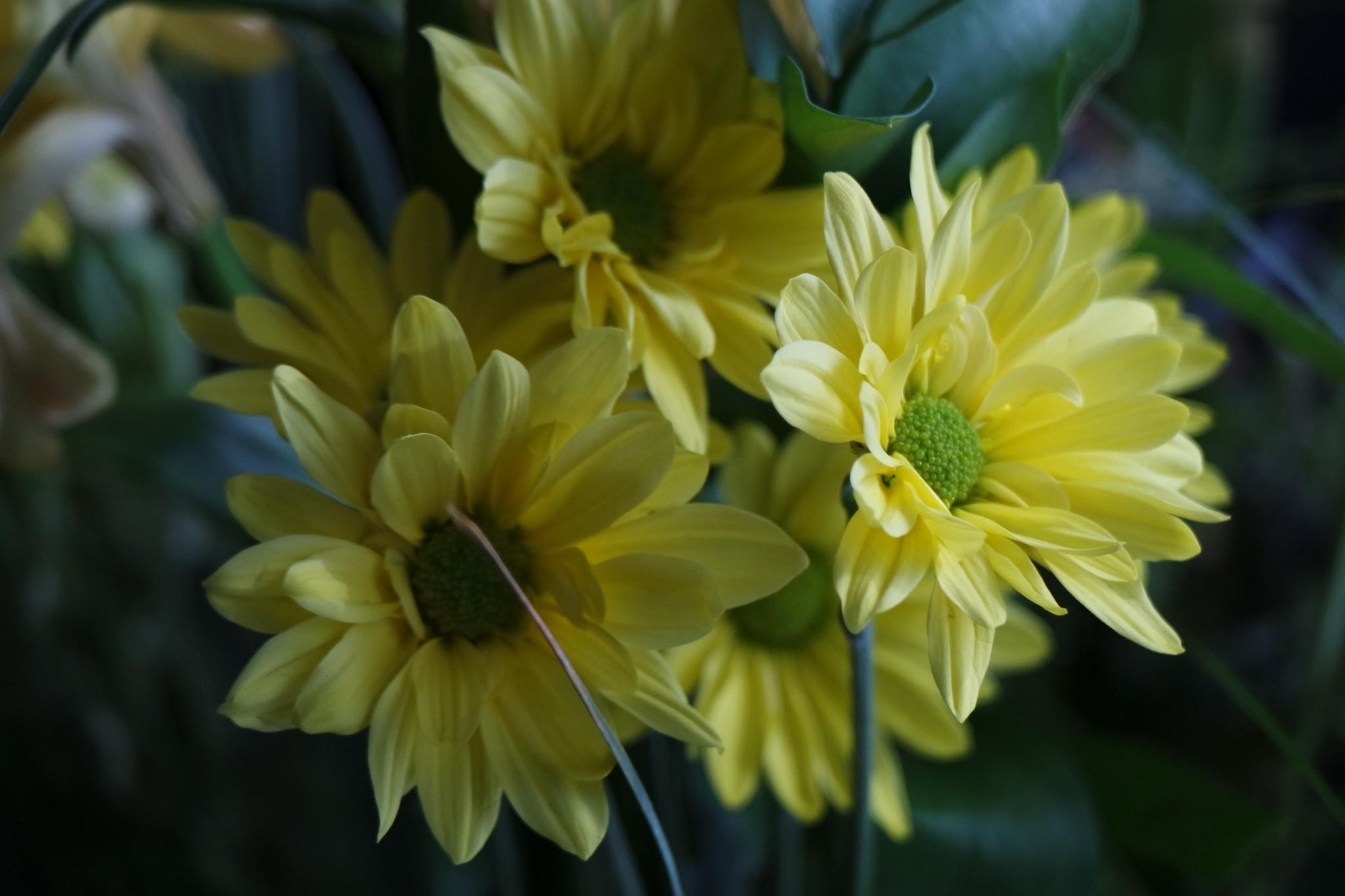 Yellow.. by kabbosh