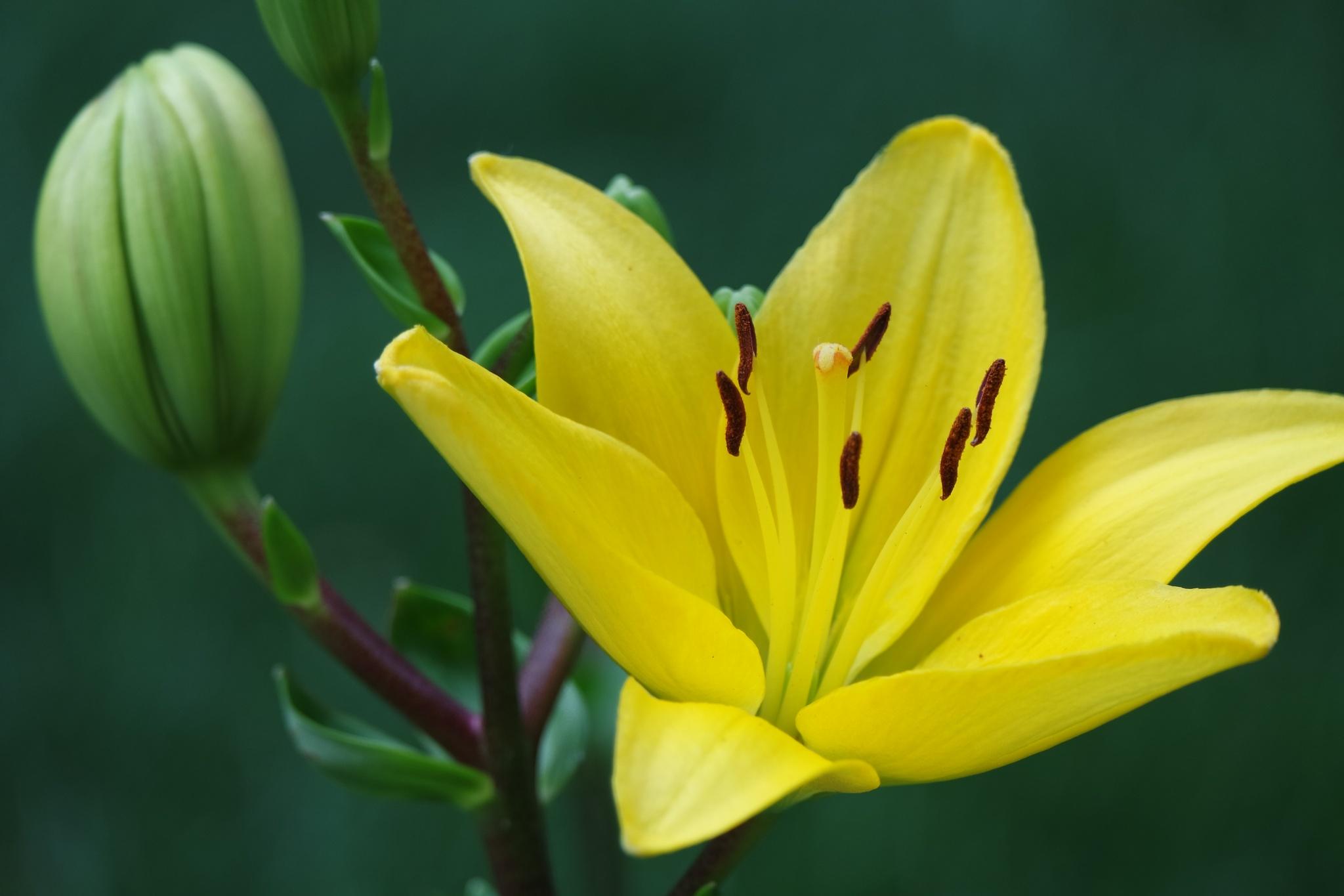 yellow. by kabbosh