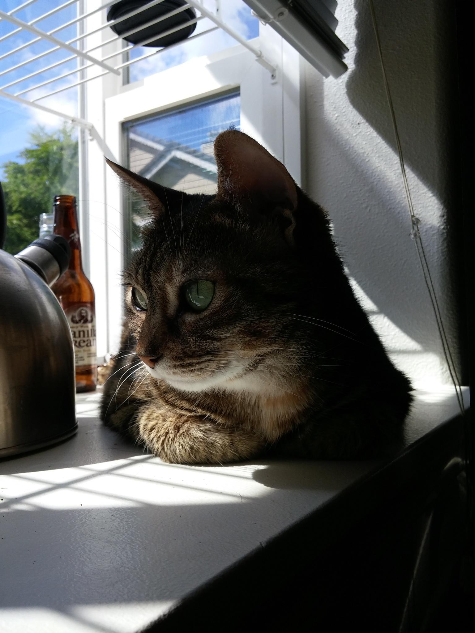 sunny window by warpita