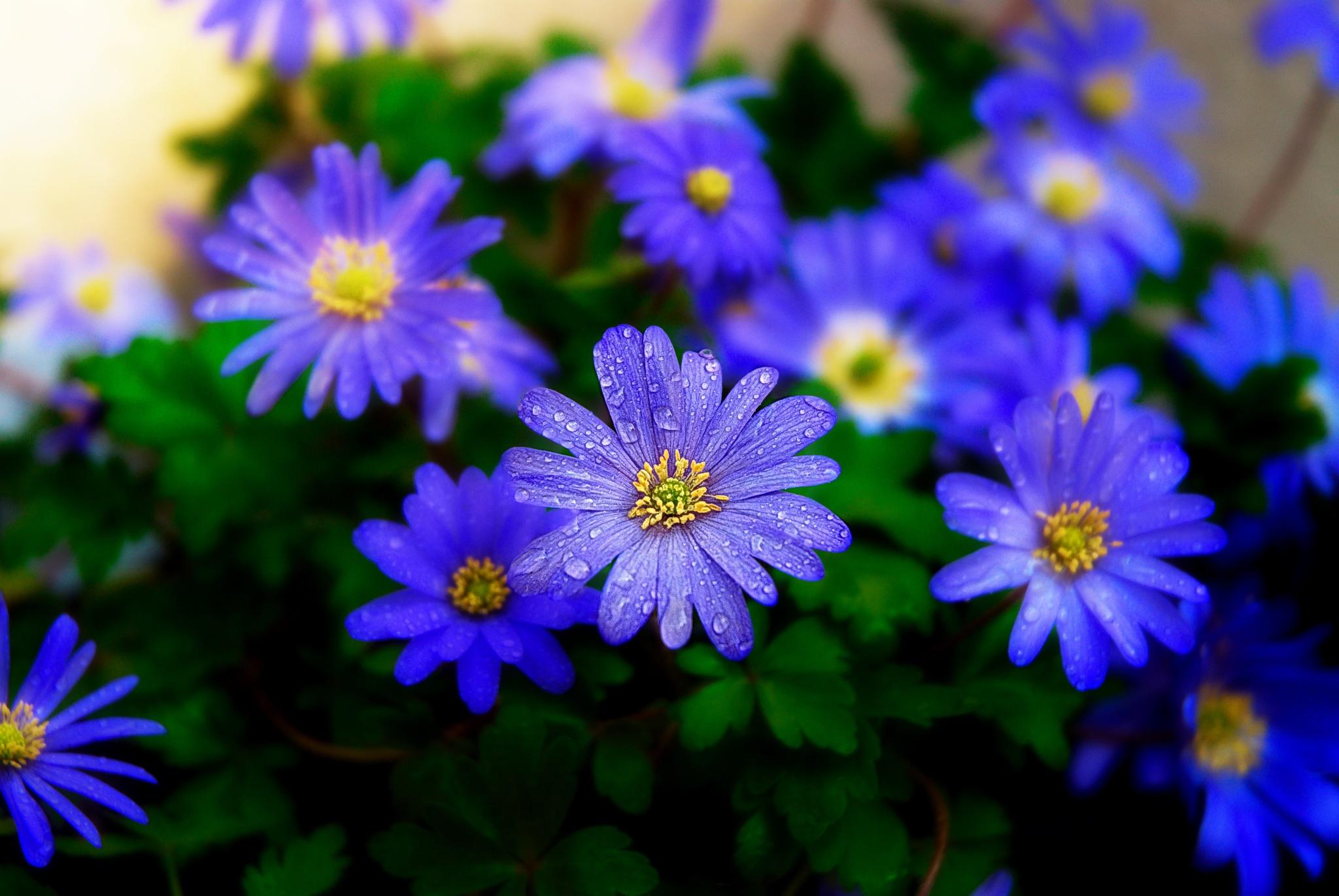 spring blues by jay clarke