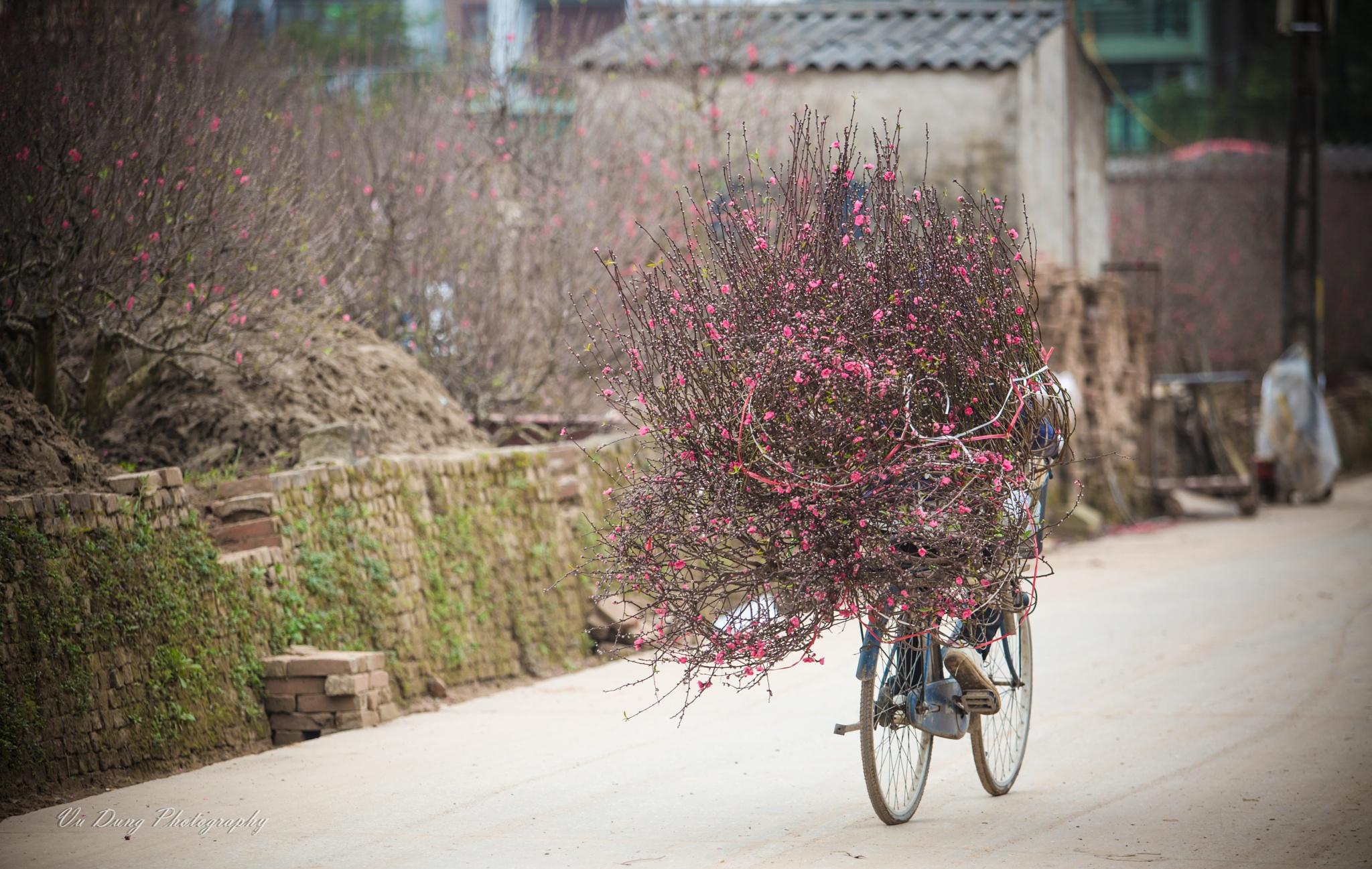 Bring spring to street by Vu Ngoc Dung