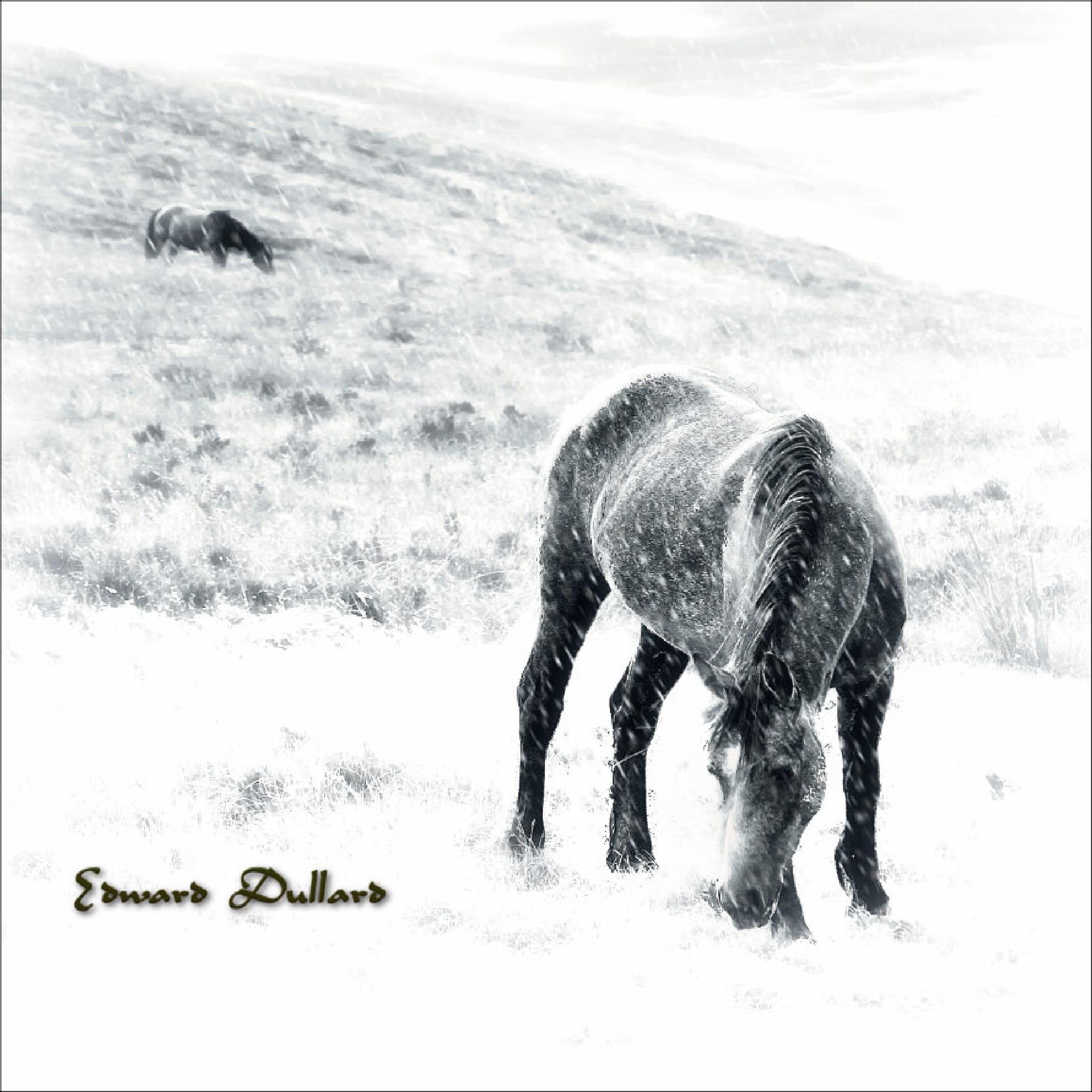 Mount Leinster horses. by EdwardDullard