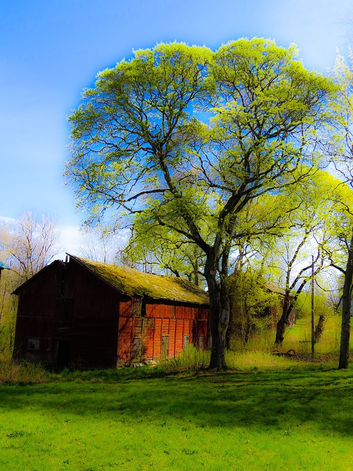 The old barn! by minashenrik