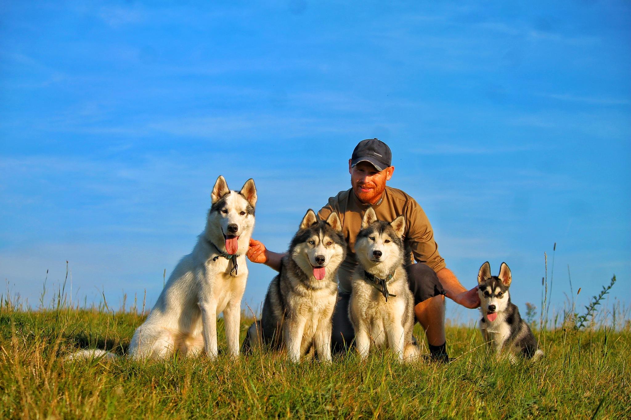 Siberian huskies - My pack by Honza Svoboda - Norra Vargar Siberians Kennel