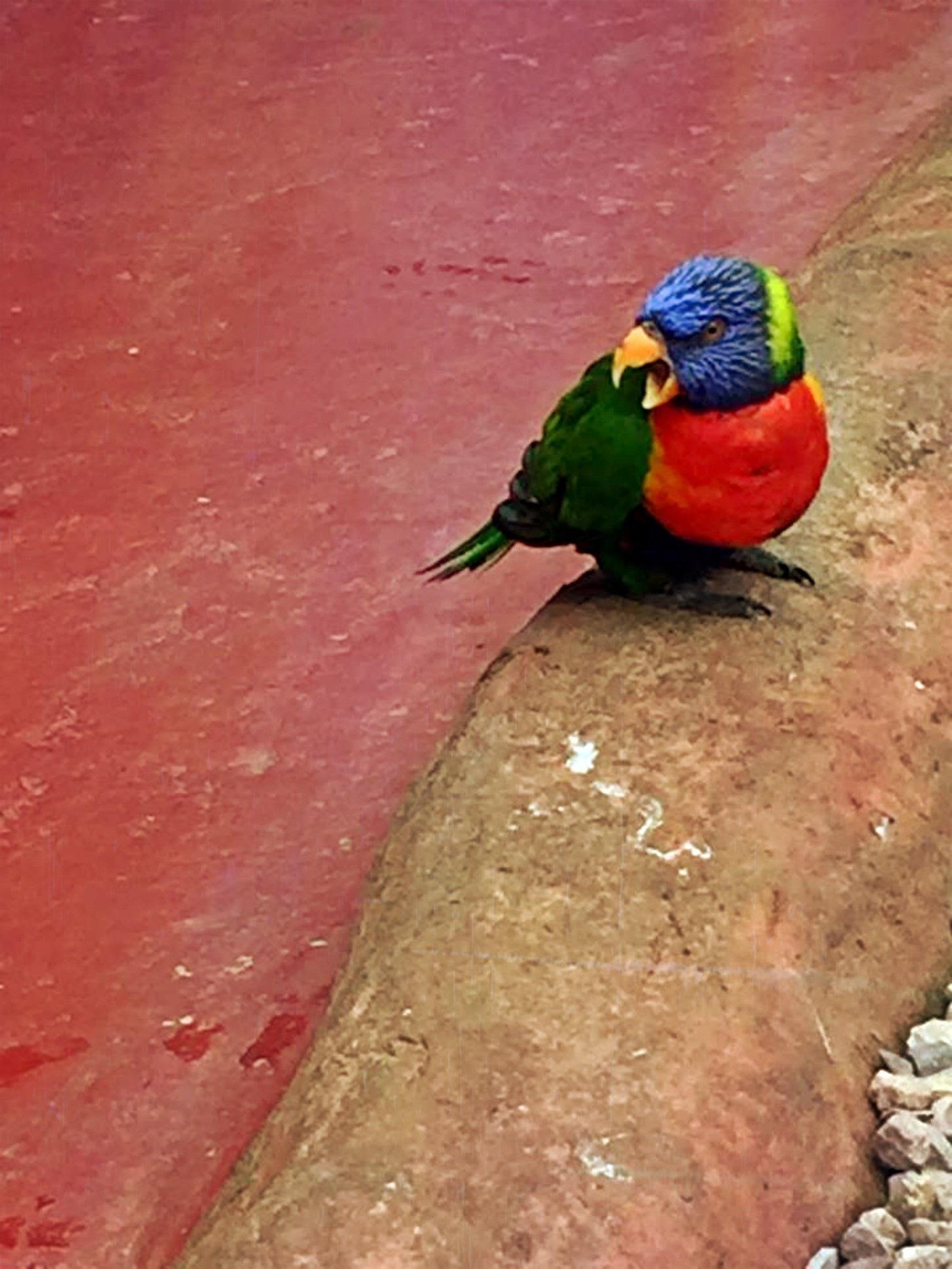 Parrot by Monique van Ruiven