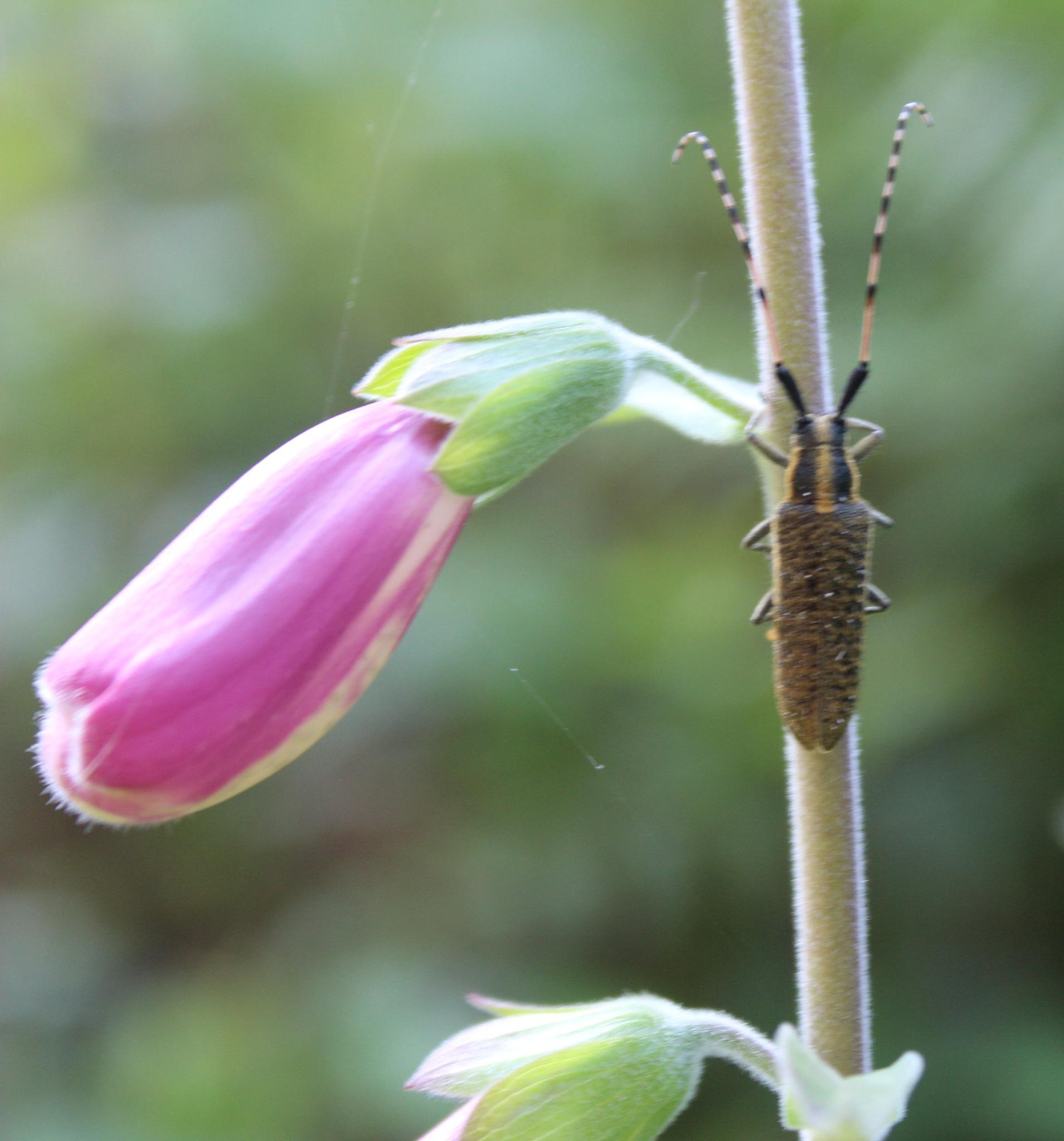 species. II by luisguga