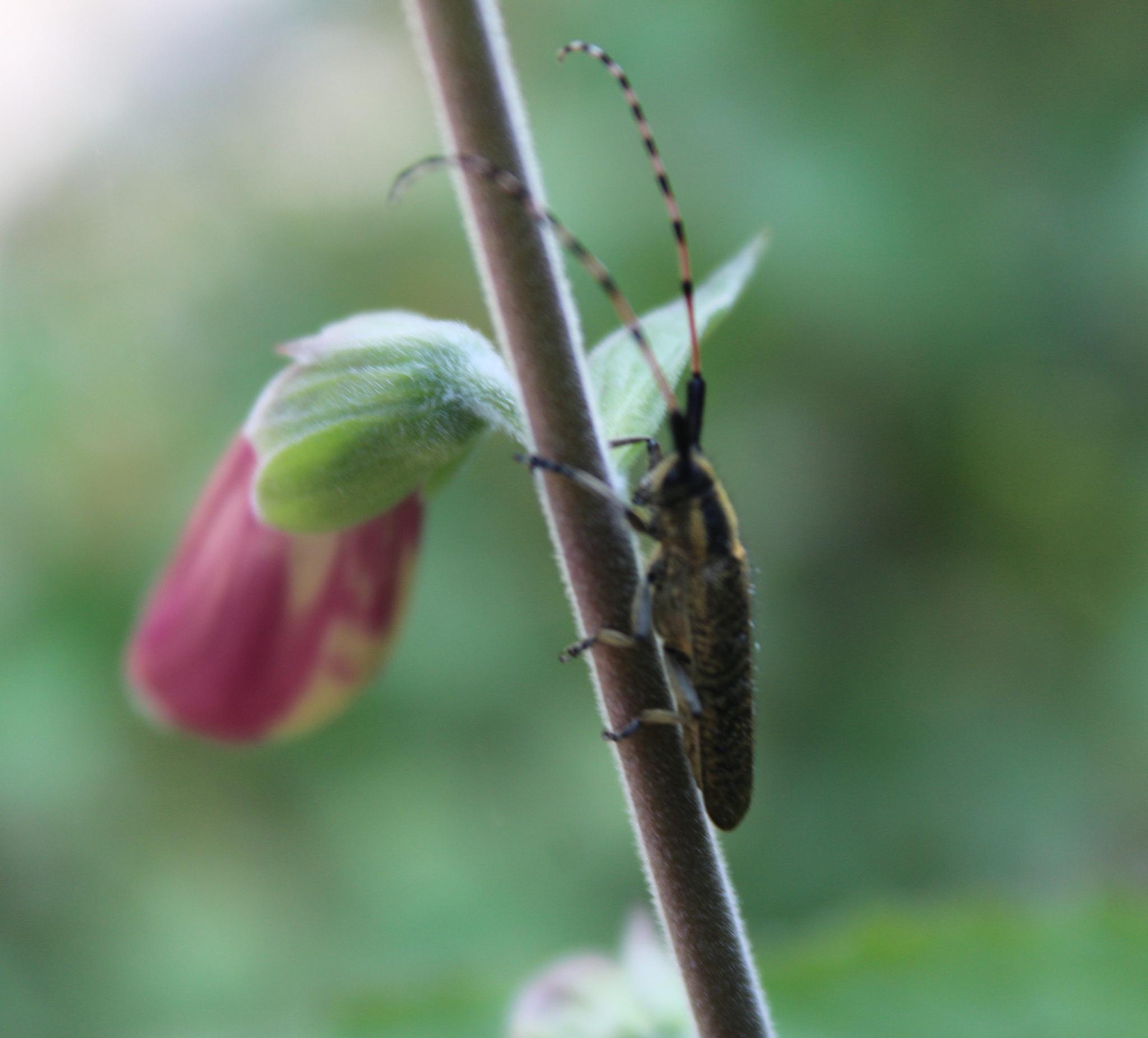species. IV by luisguga
