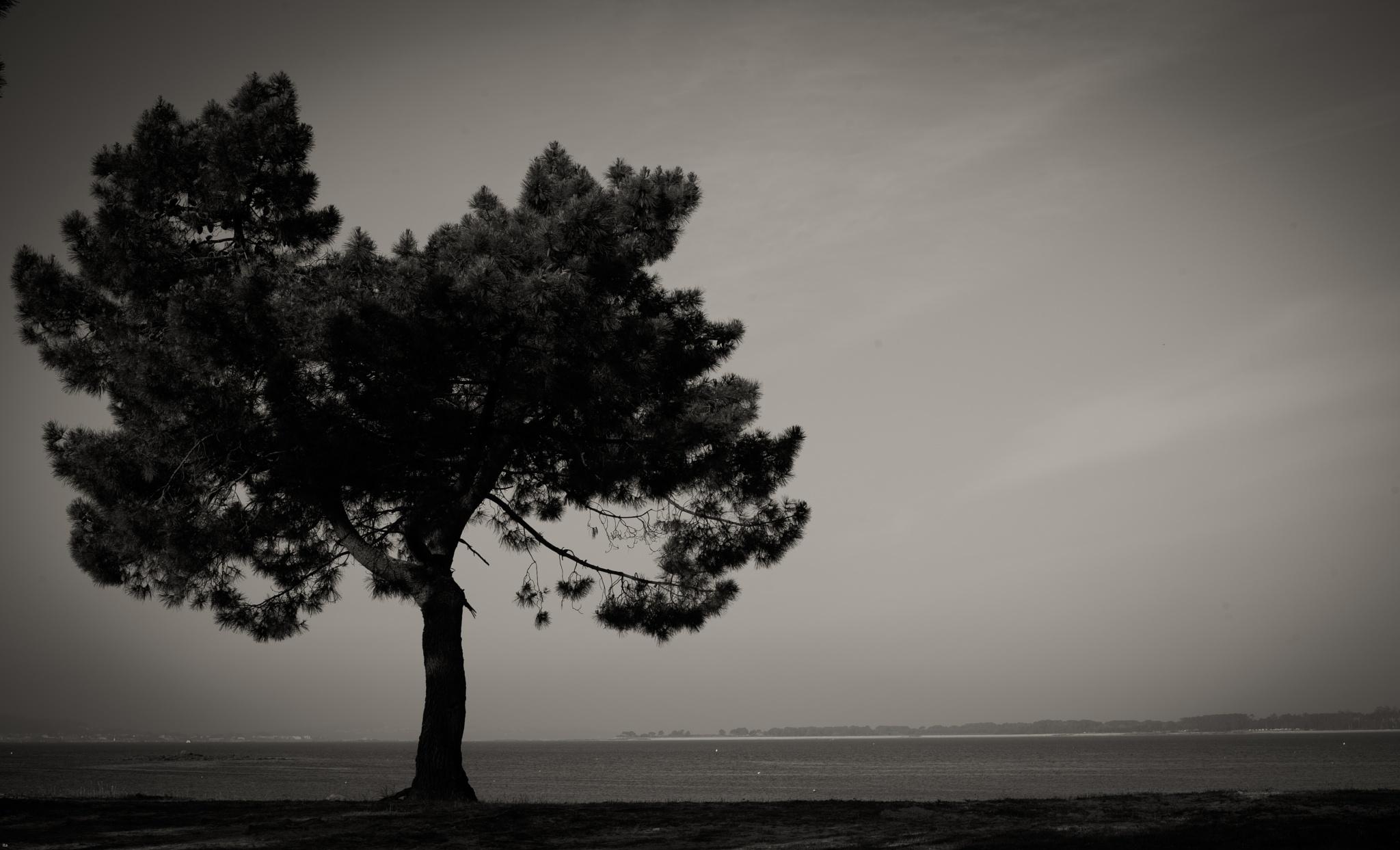 Paz en el paso del tiempo by ita05