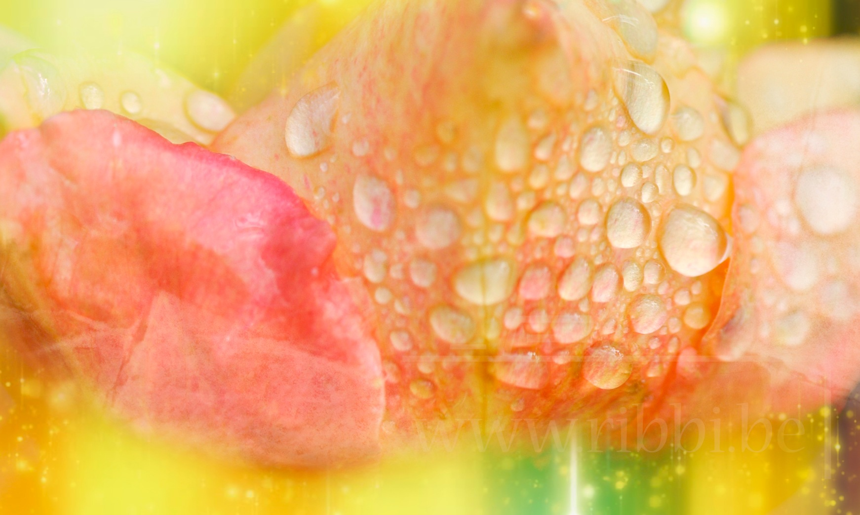wet colour by Ribbi
