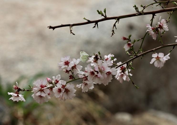 Butterfly in spring by malekzadeh1384