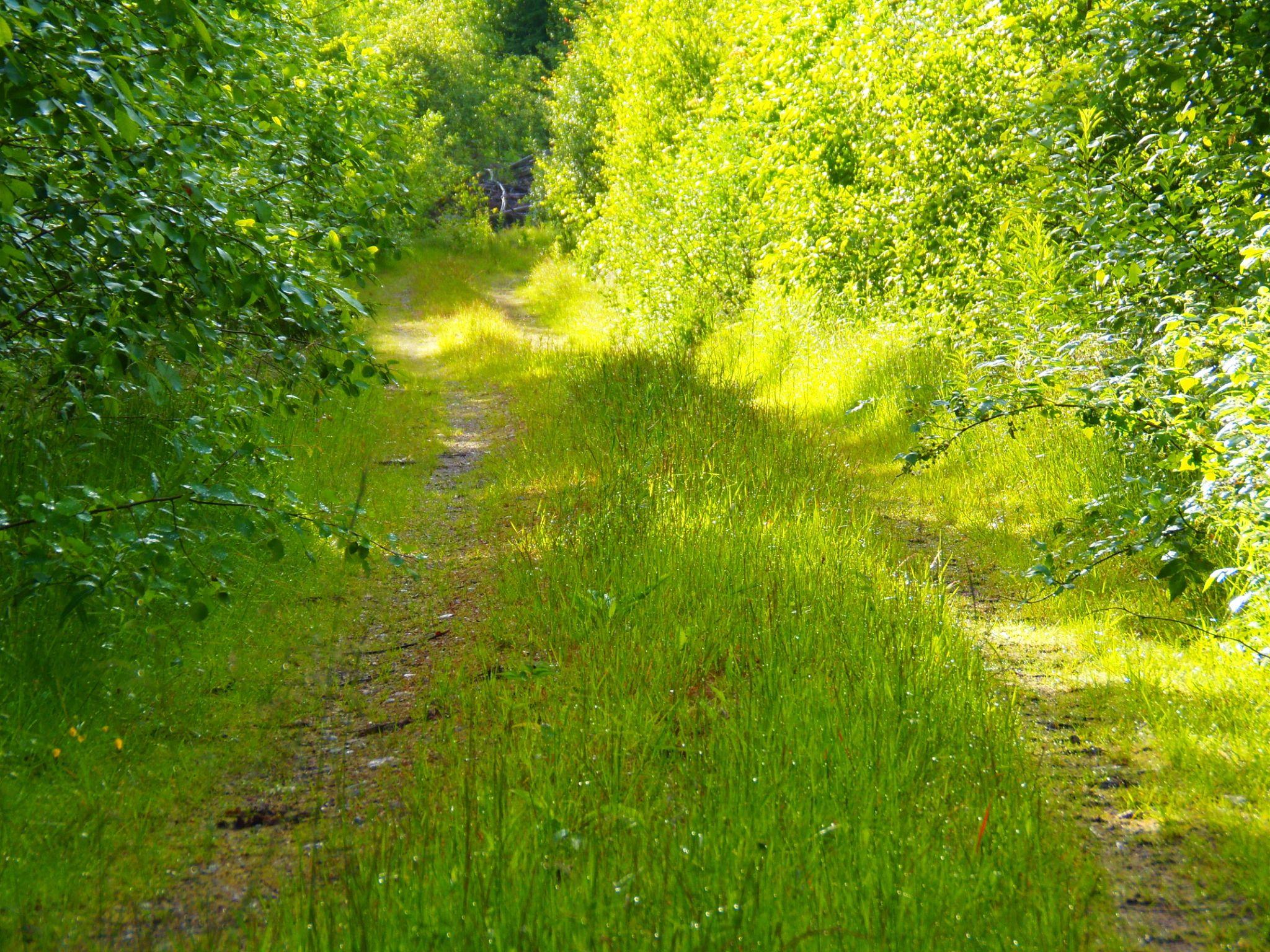 Midsummer - Finland by laura.kamil