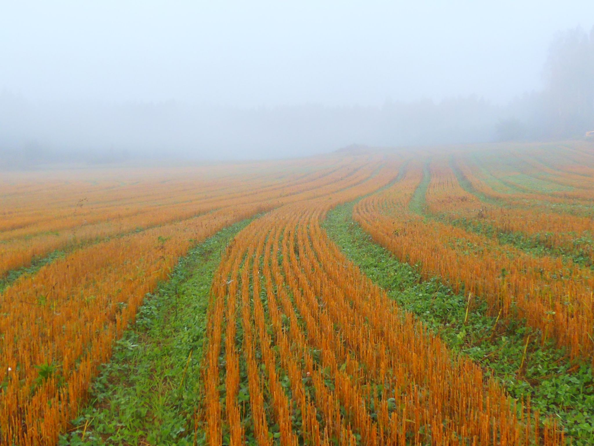 field in the autumn - pelto by laura.kamil