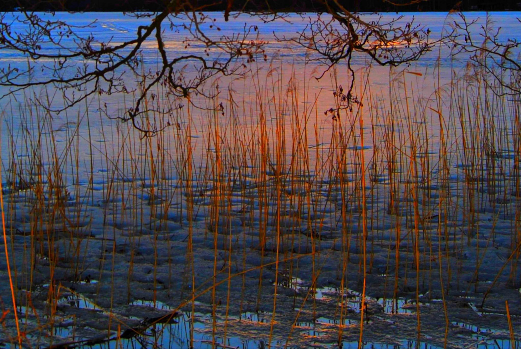 """Sunset glow"" on a frozen lake - ""Kajo"" by laura.kamil"