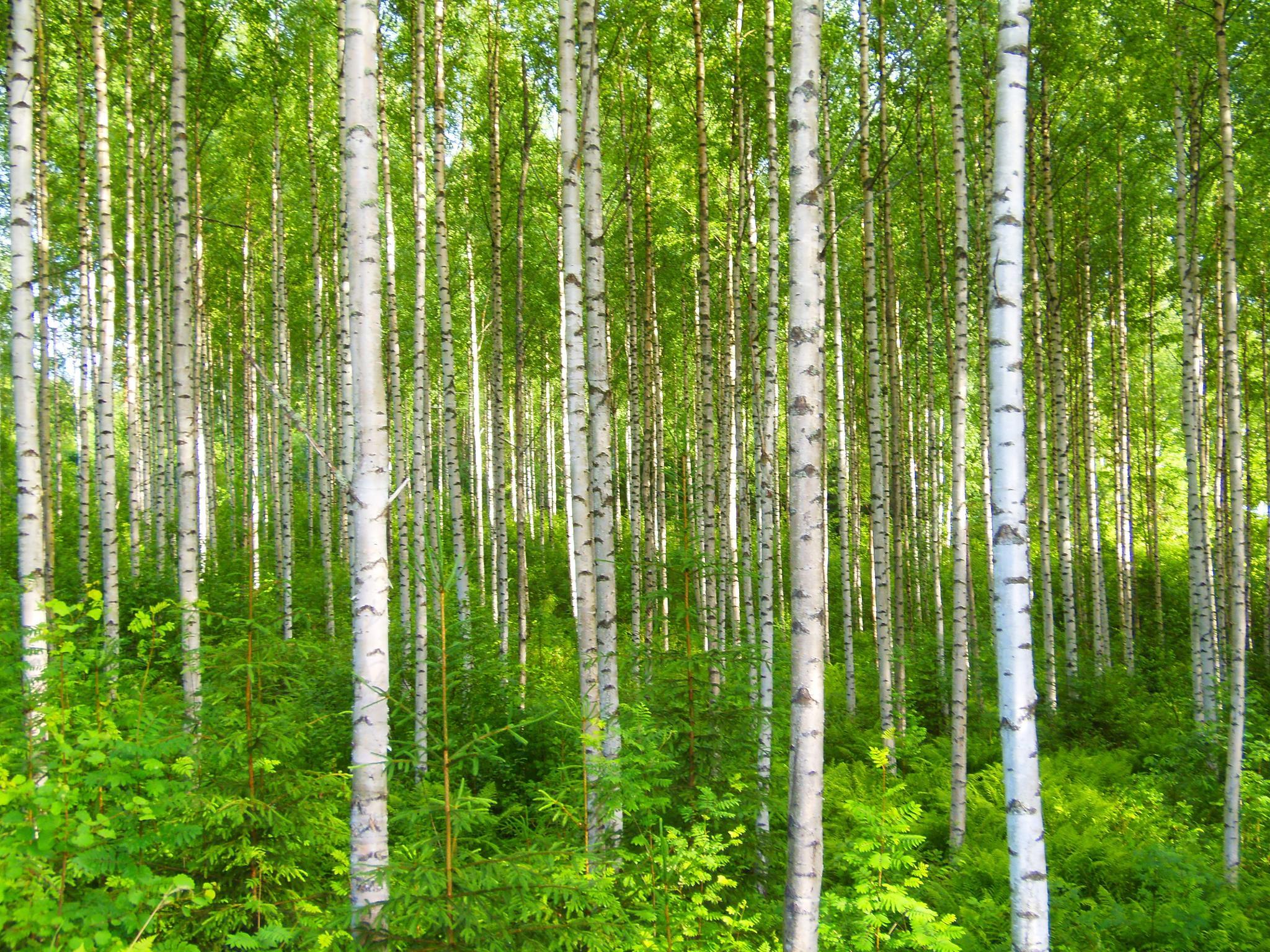 """We miss the green of summer  -""""Pääsiäinen"""" by laura.kamil"""