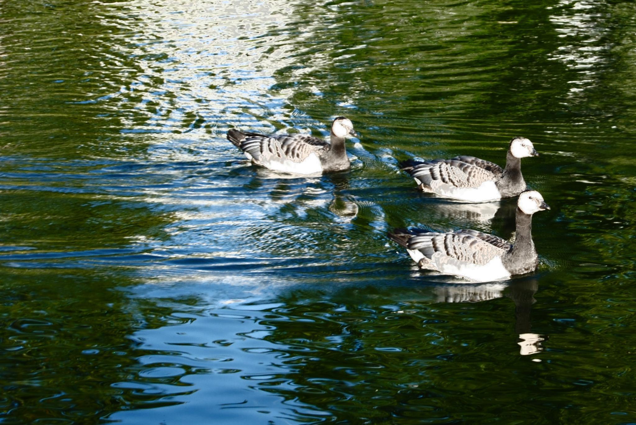 """Birds - """"Linnut"""" by laura.kamil"""