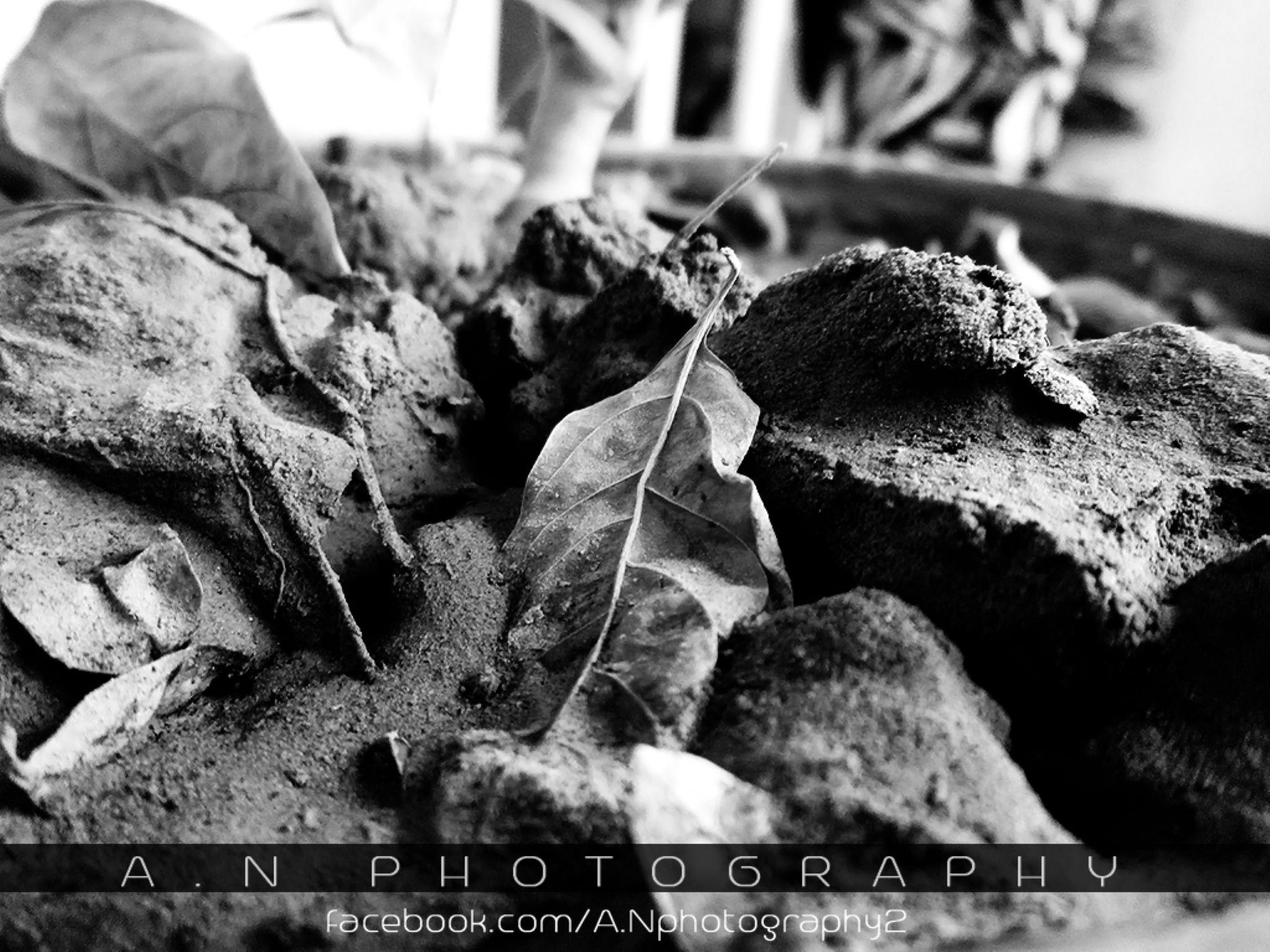 Plants by Aillia.naqvi