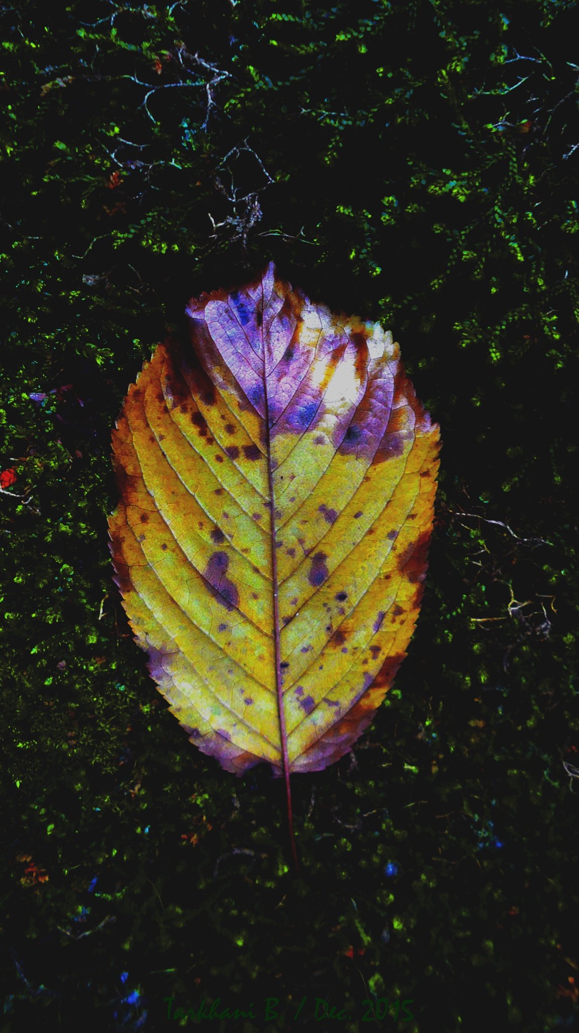 Autumn Spirit by BelgaTarkhani