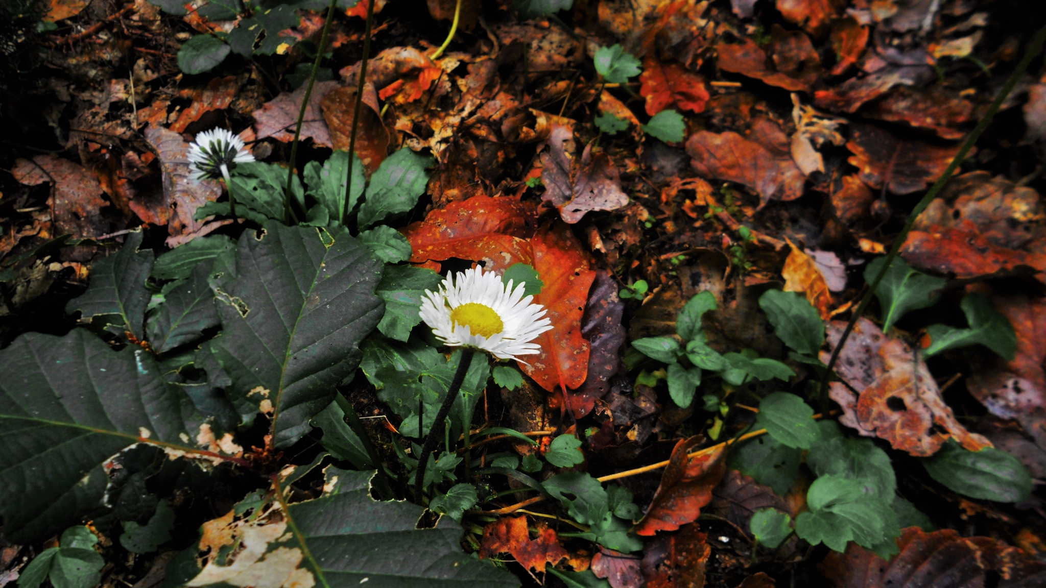 Margerita and the leaves  by BelgaTarkhani