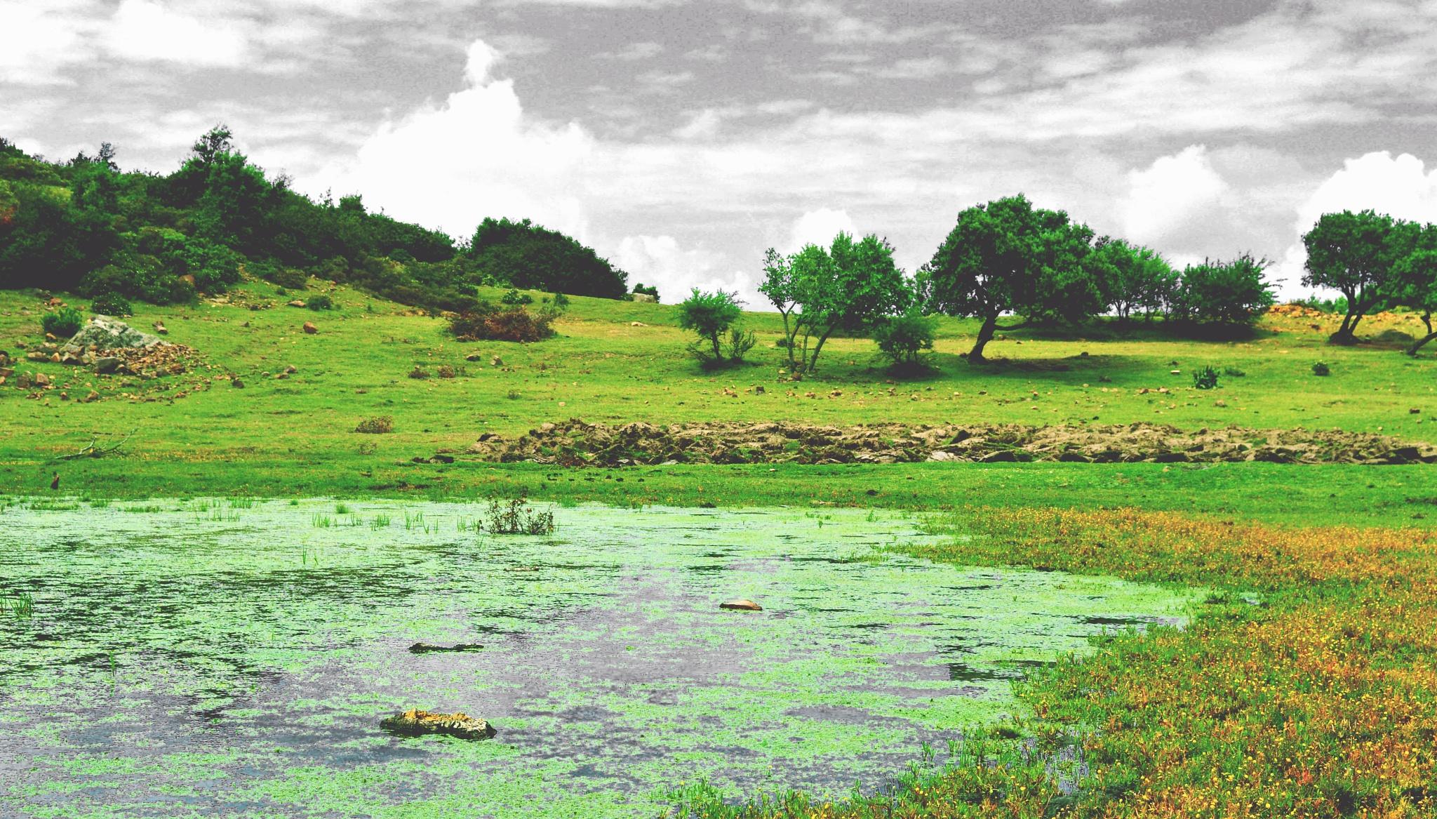 Swamp escape by BelgaTarkhani