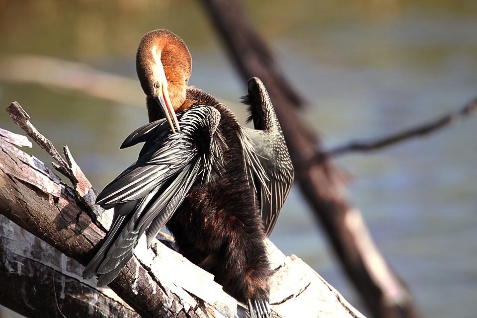 Wild Bird by Jacobus
