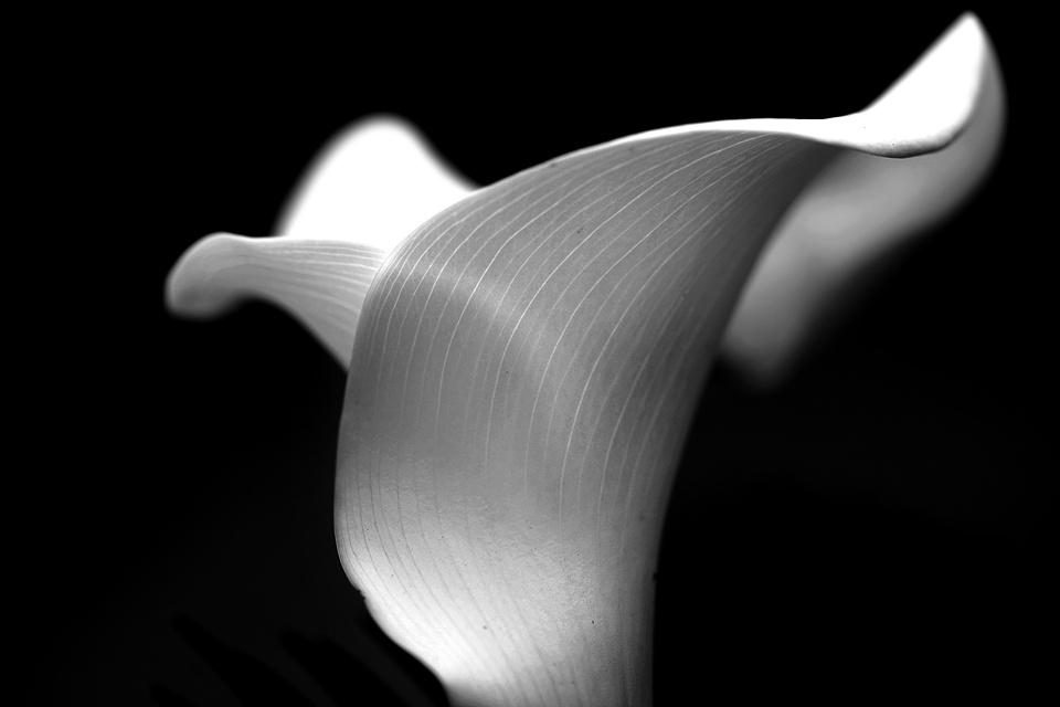 White on Black by Jacobus