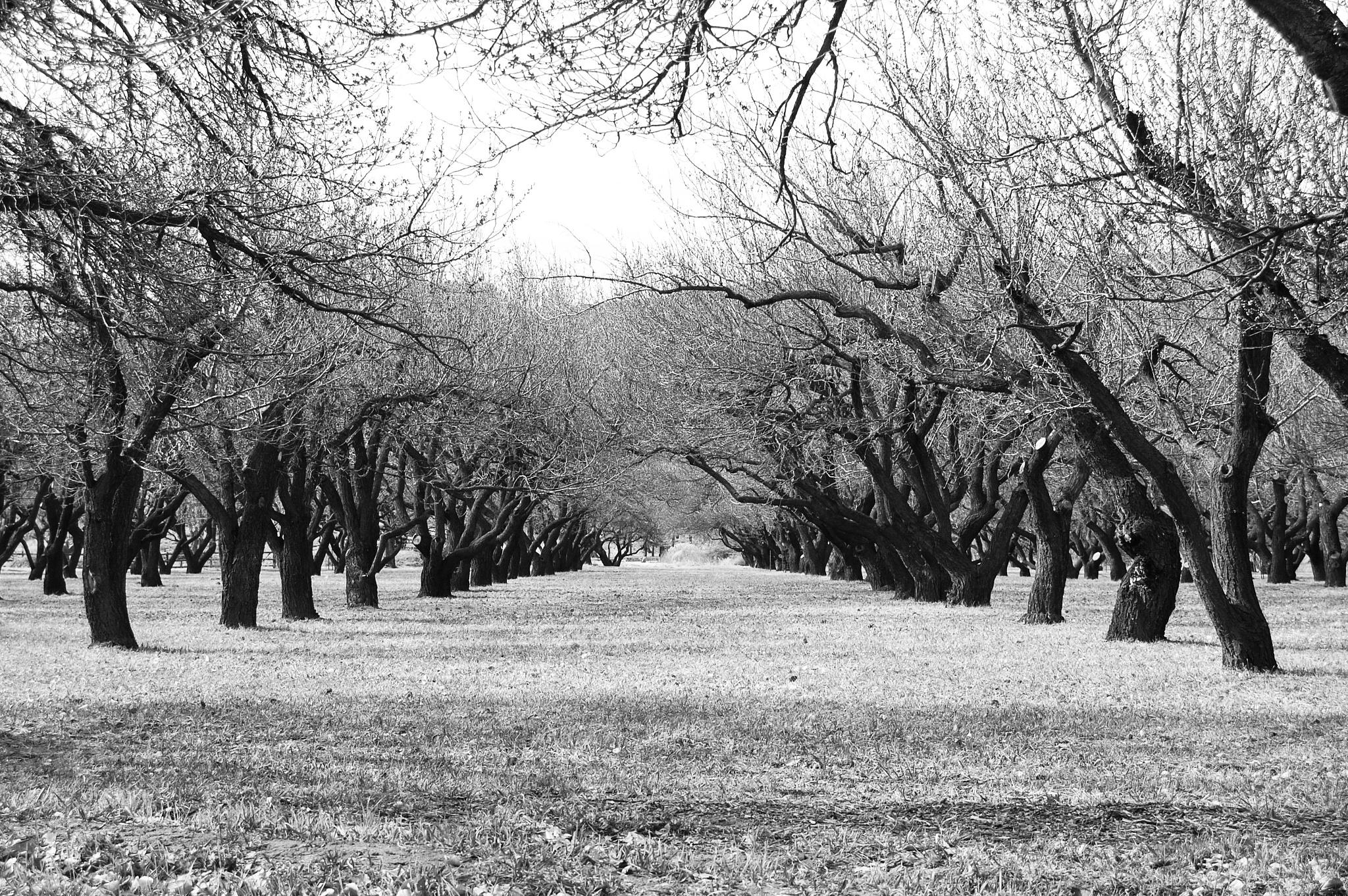 orchard by Amy Elizabeth