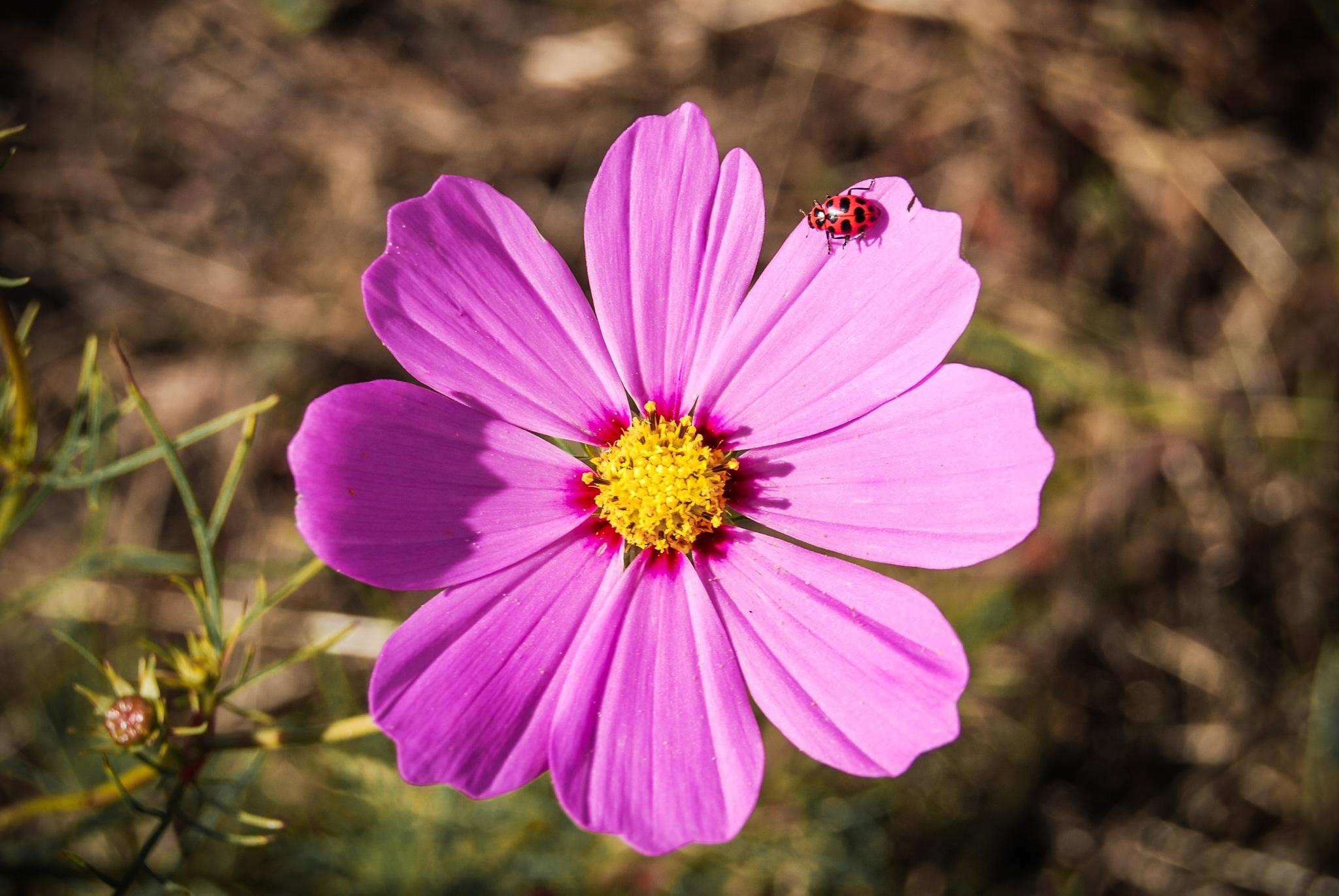 Lovely Lady Bug by Amy Elizabeth