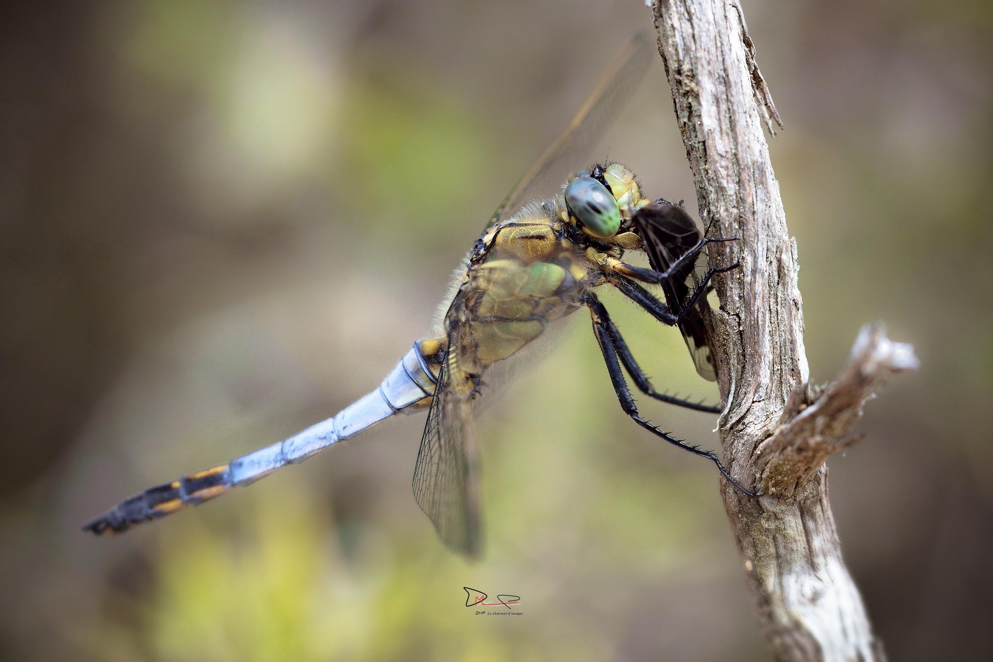 DMP le chasseur d'imges-Photography by DMP le chasseur d'images-Photography