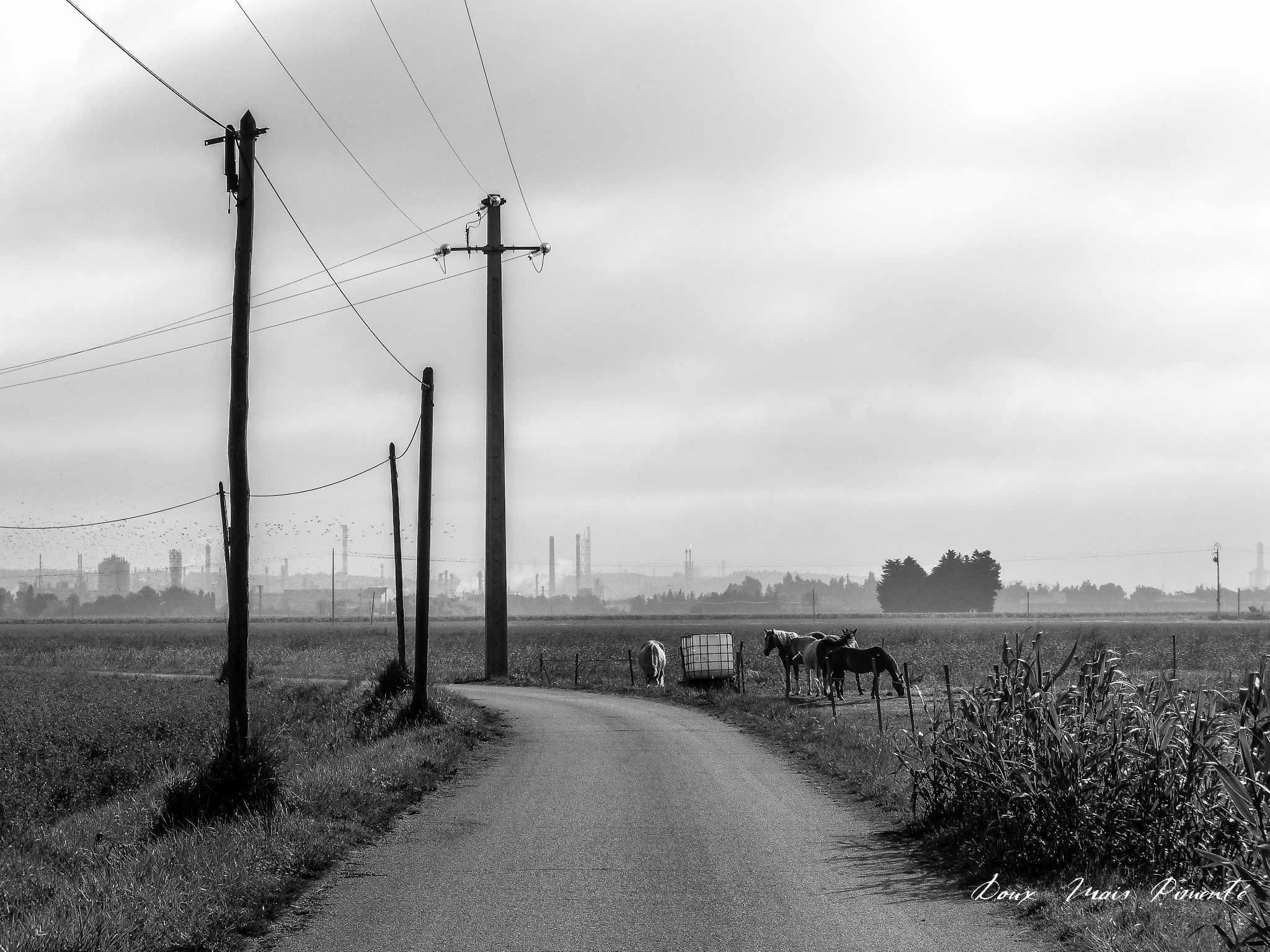 Untitled by DMP le chasseur d'images-Photography