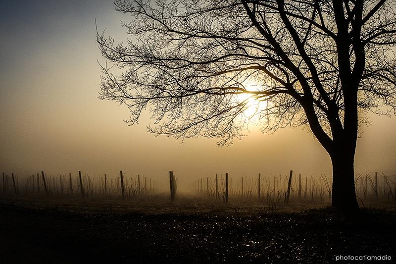 Golden fog by catiamadioph