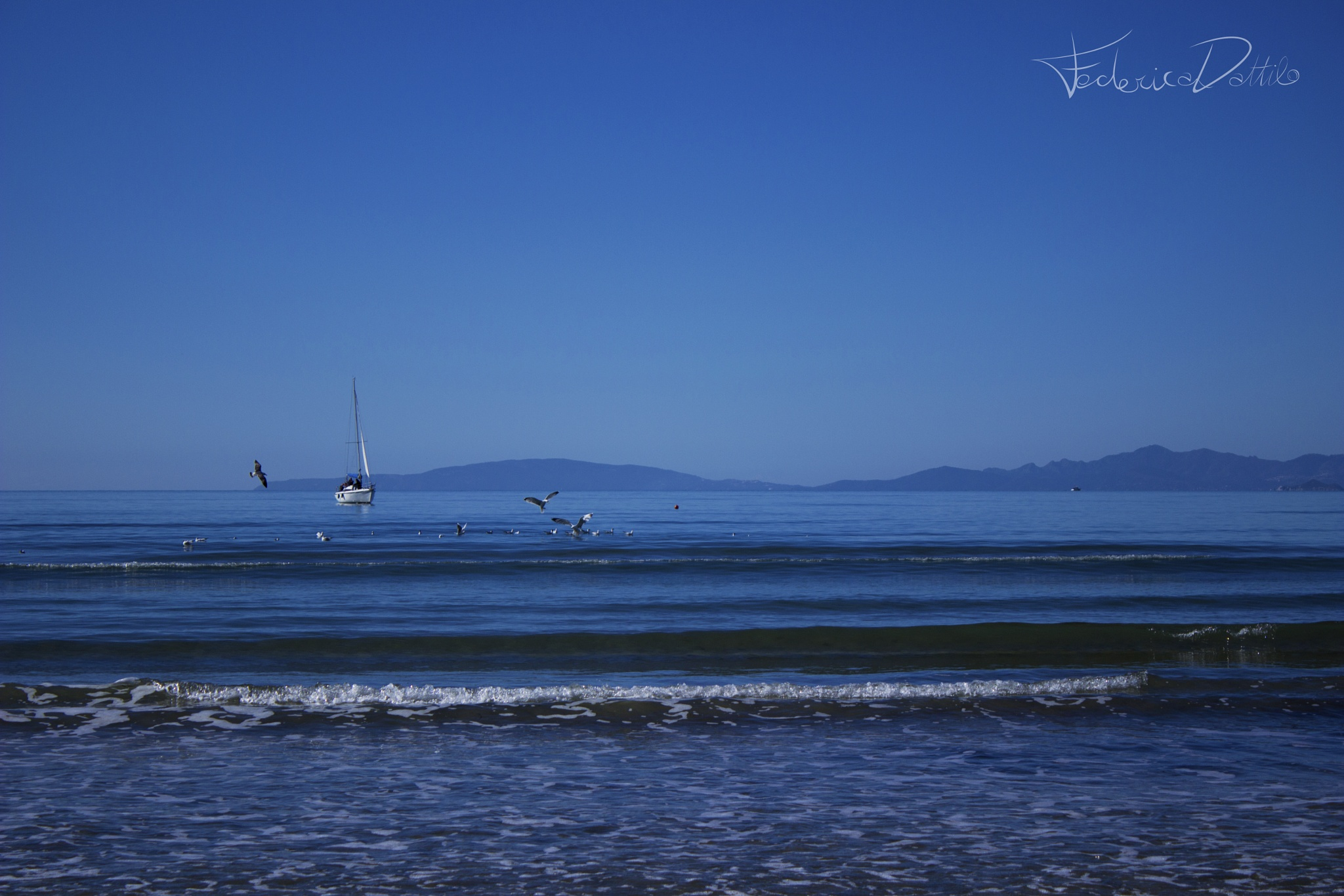 Bird and Boat. by Pterodattilo