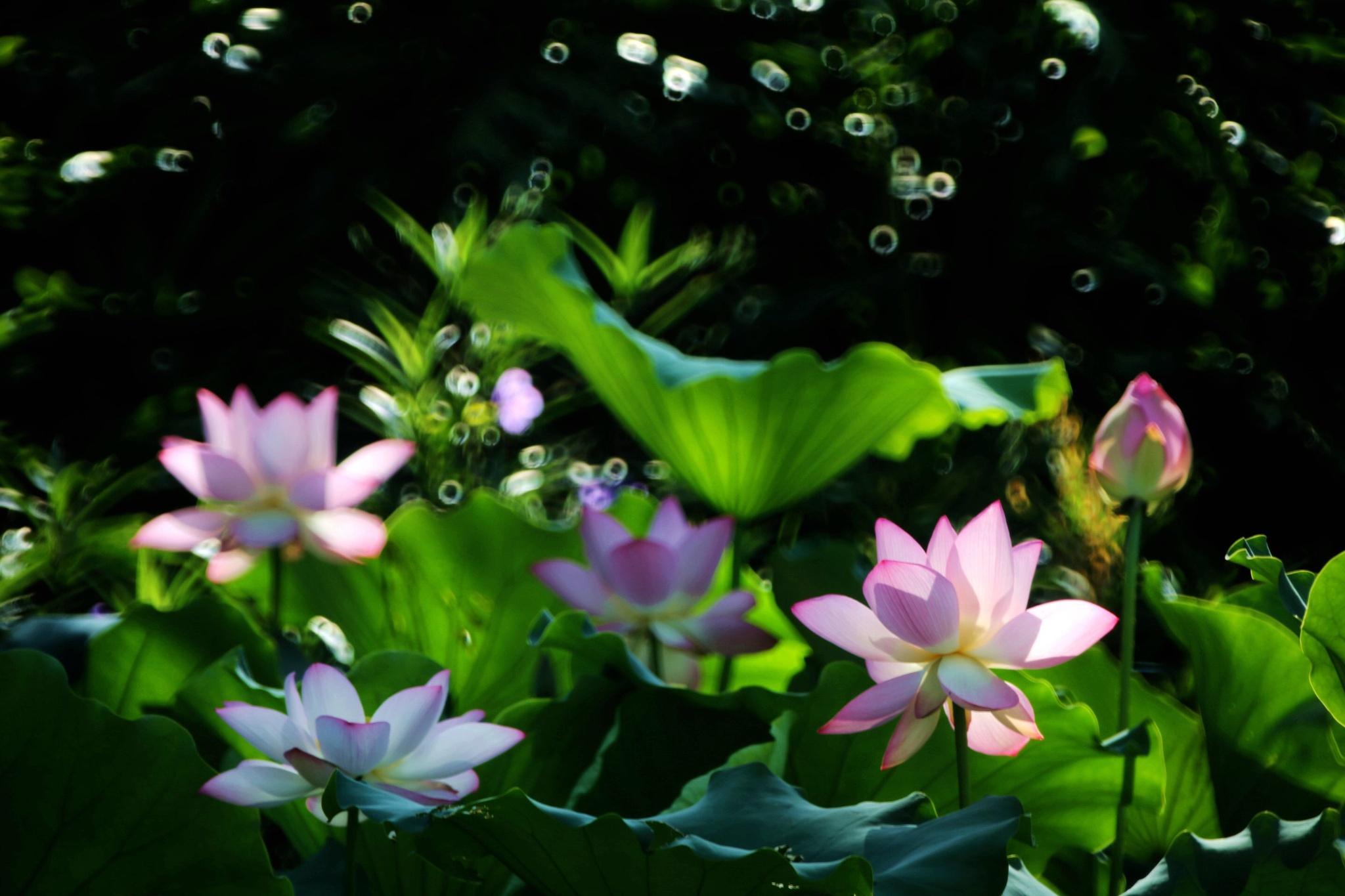 Untitled by Winnie Shao