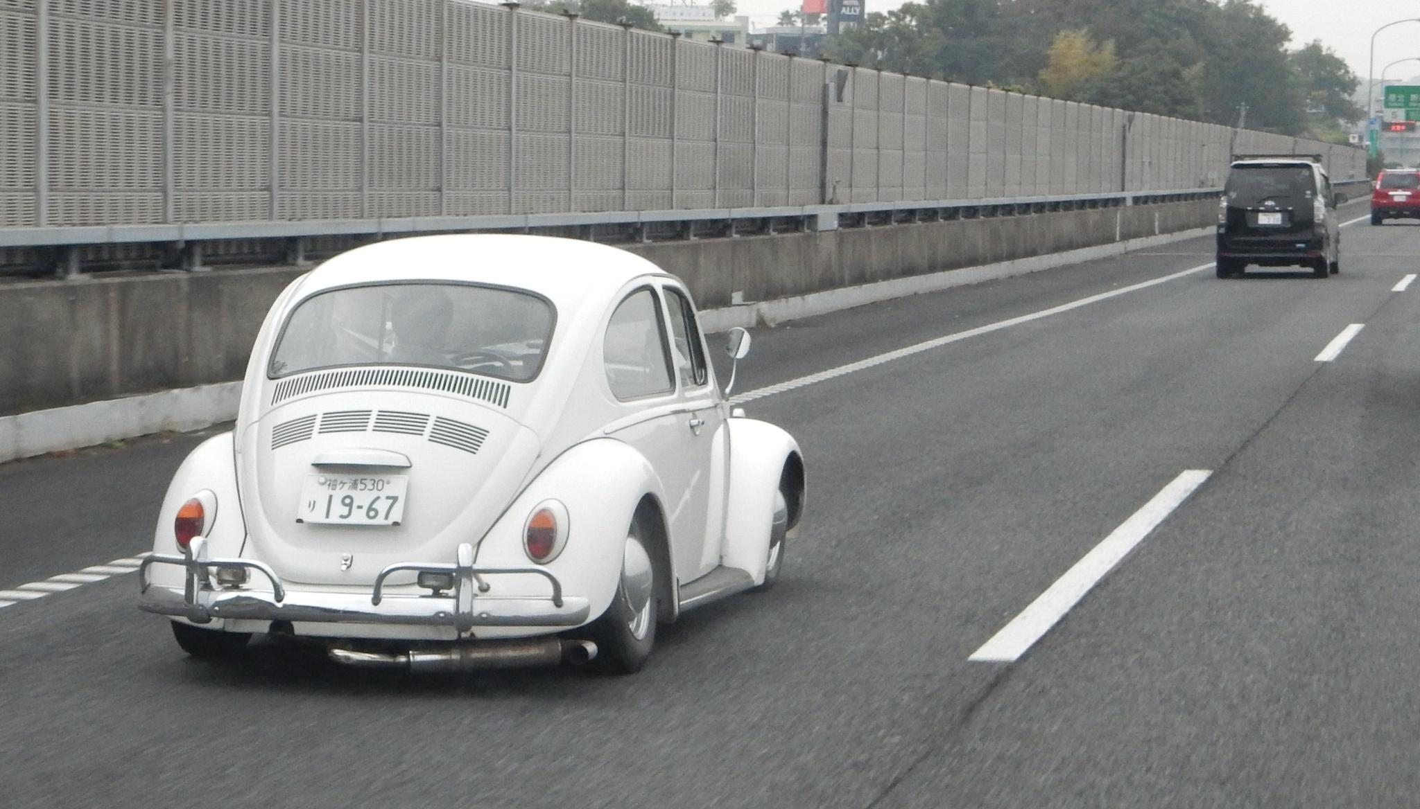 Low Bug by Dieter Kepler