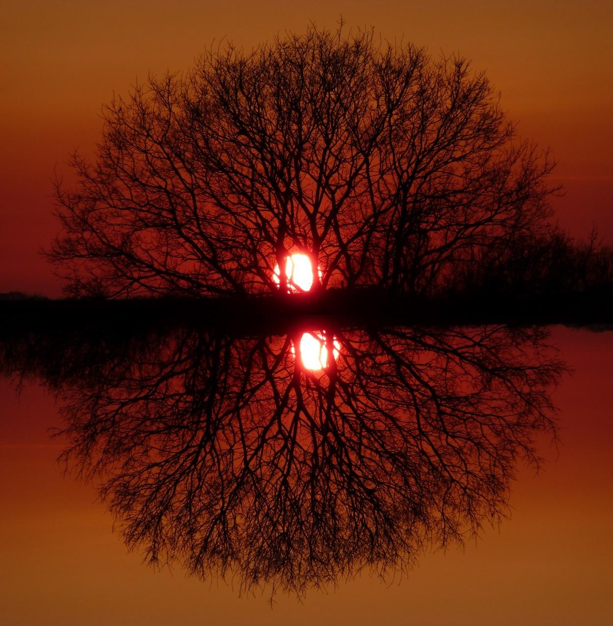 Tree Circle by Dieter Kepler