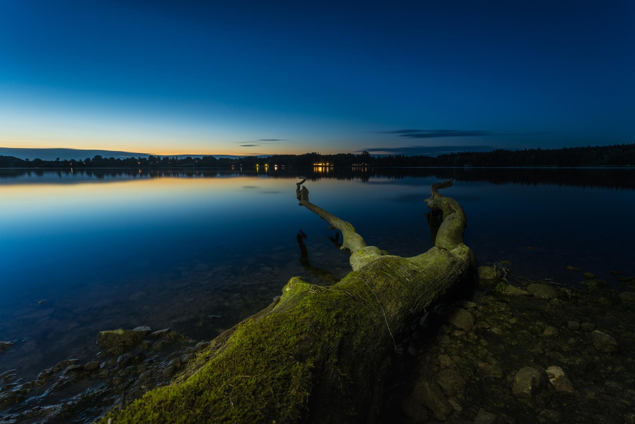 mystic tree by Fejeregyhazy