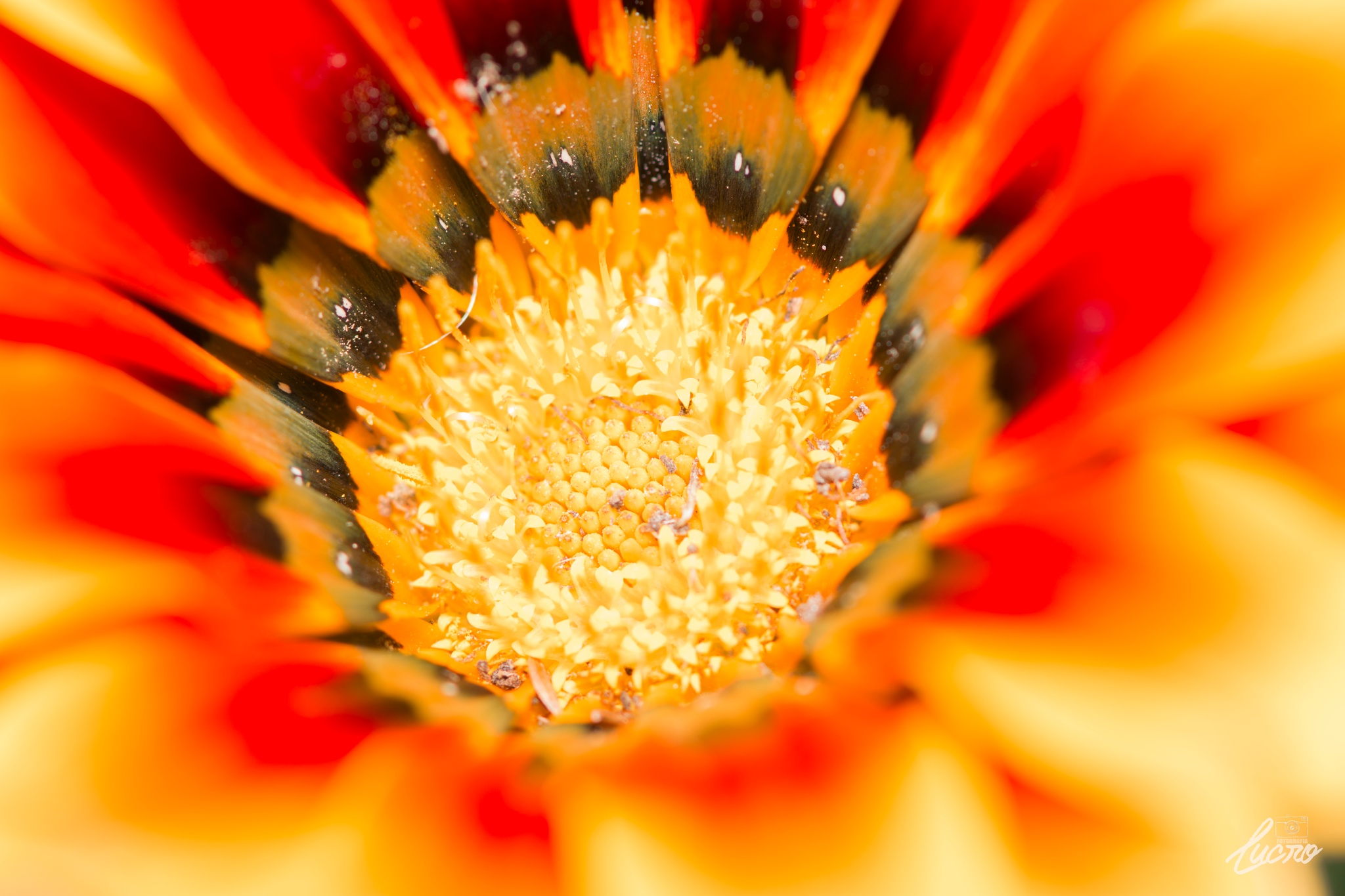 Macro Flower by LucroFotografia