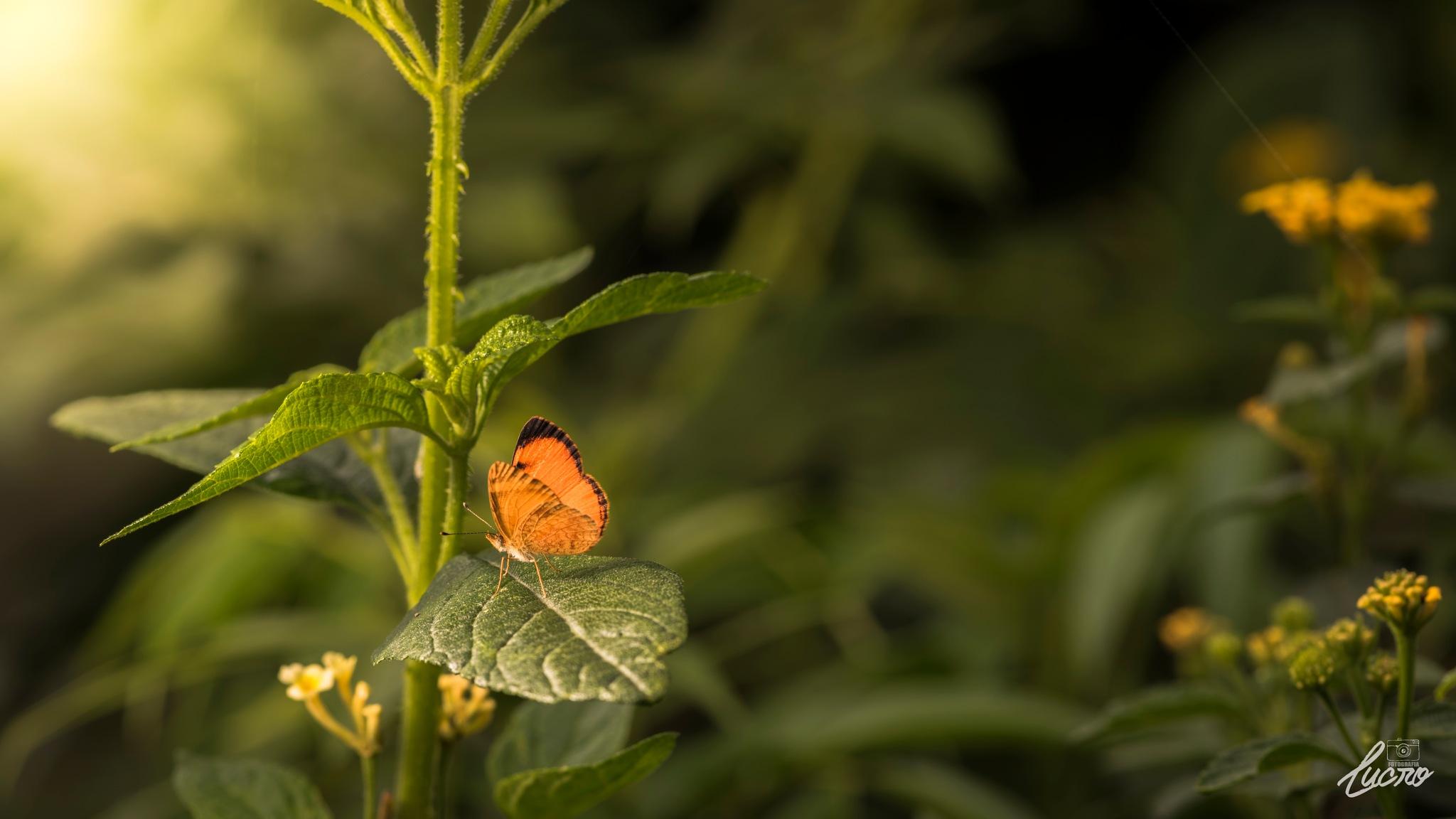 Magic Butterfly by LucroFotografia