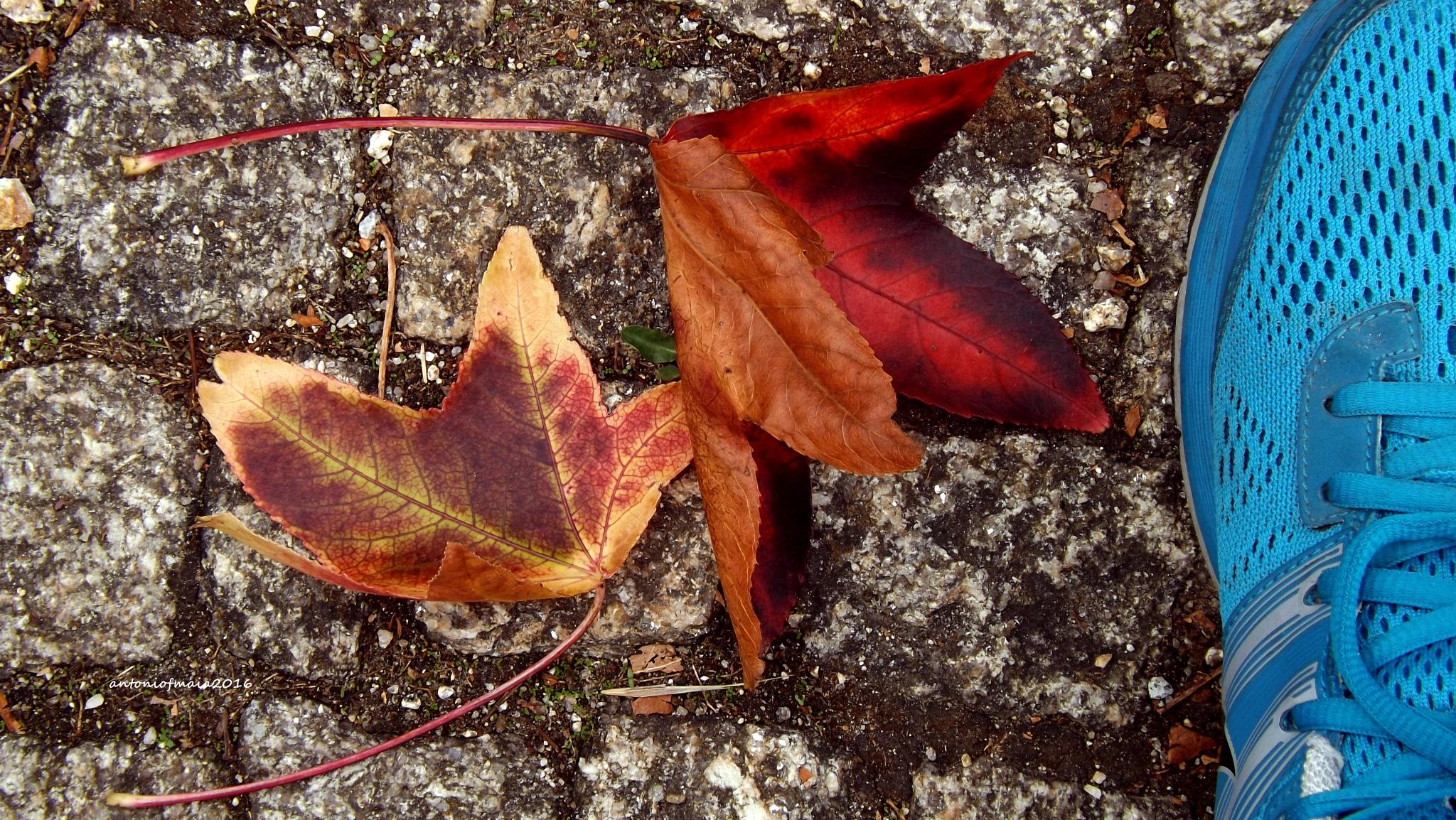 Autumn alchemist... by Antonio F. Maia