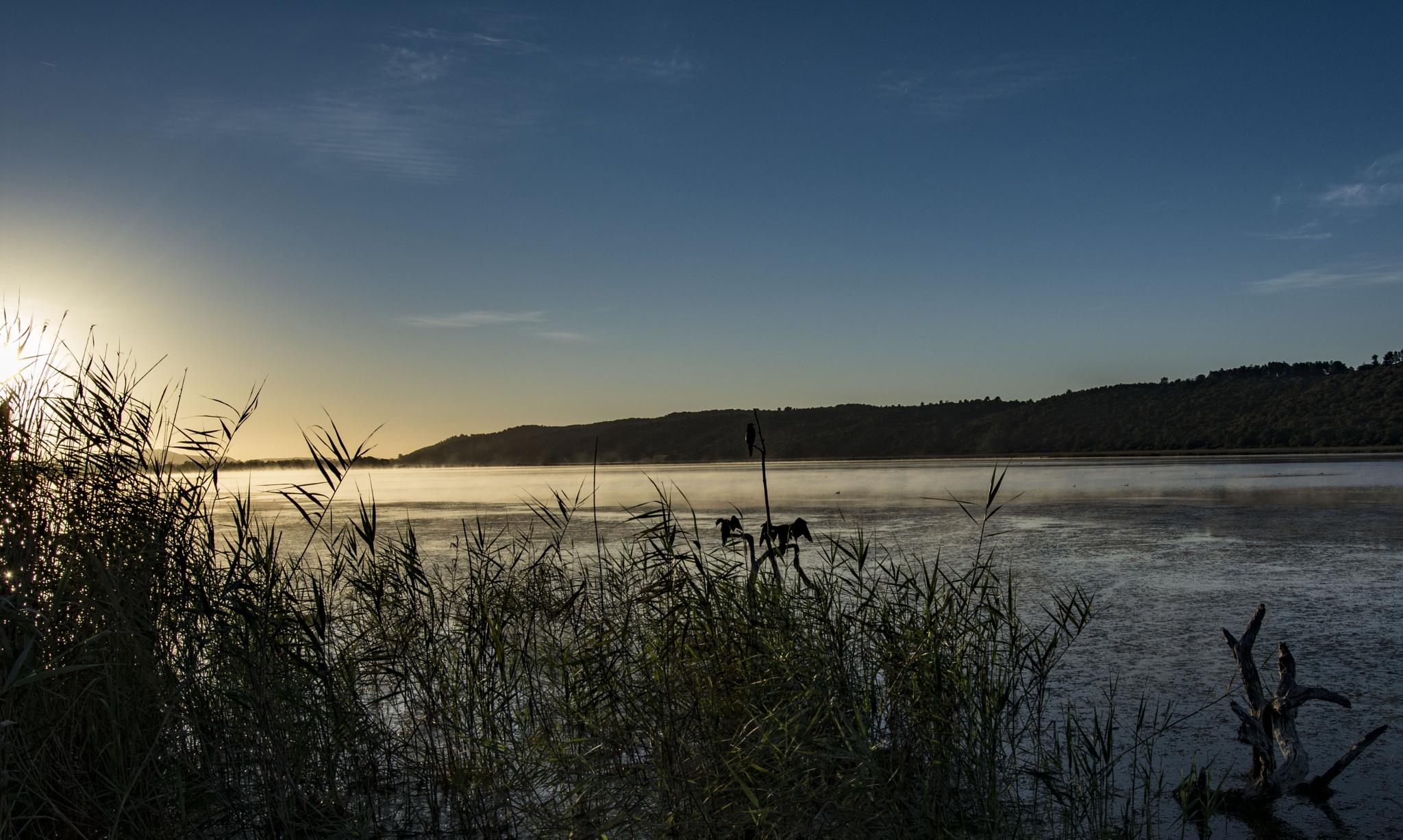 Misty Morning by Bennie Oberholzer
