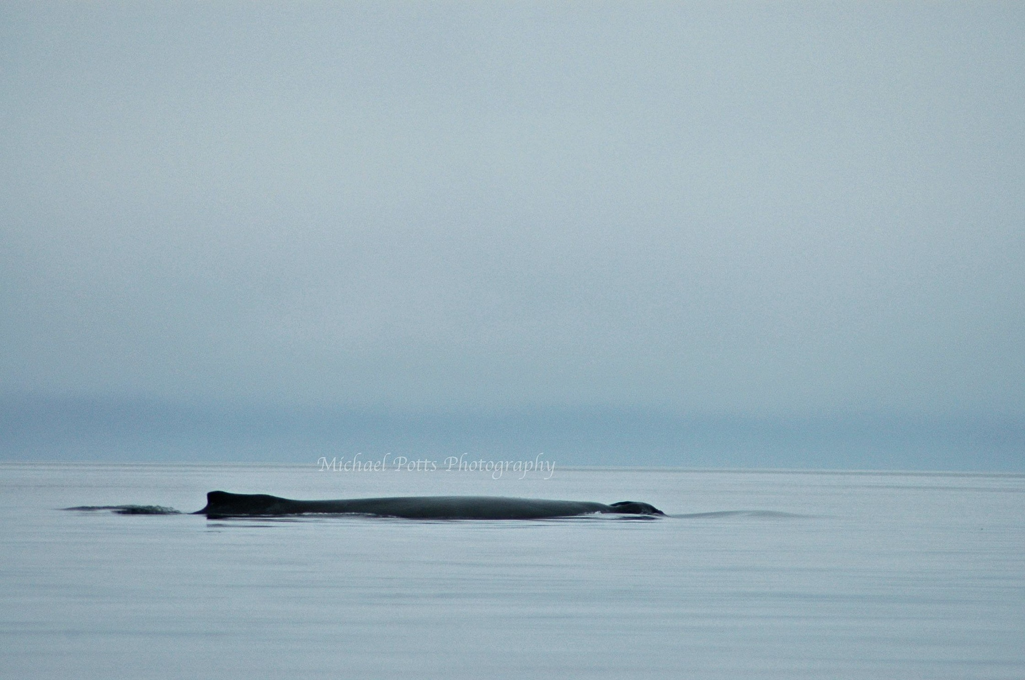 Humpback by Mikespics