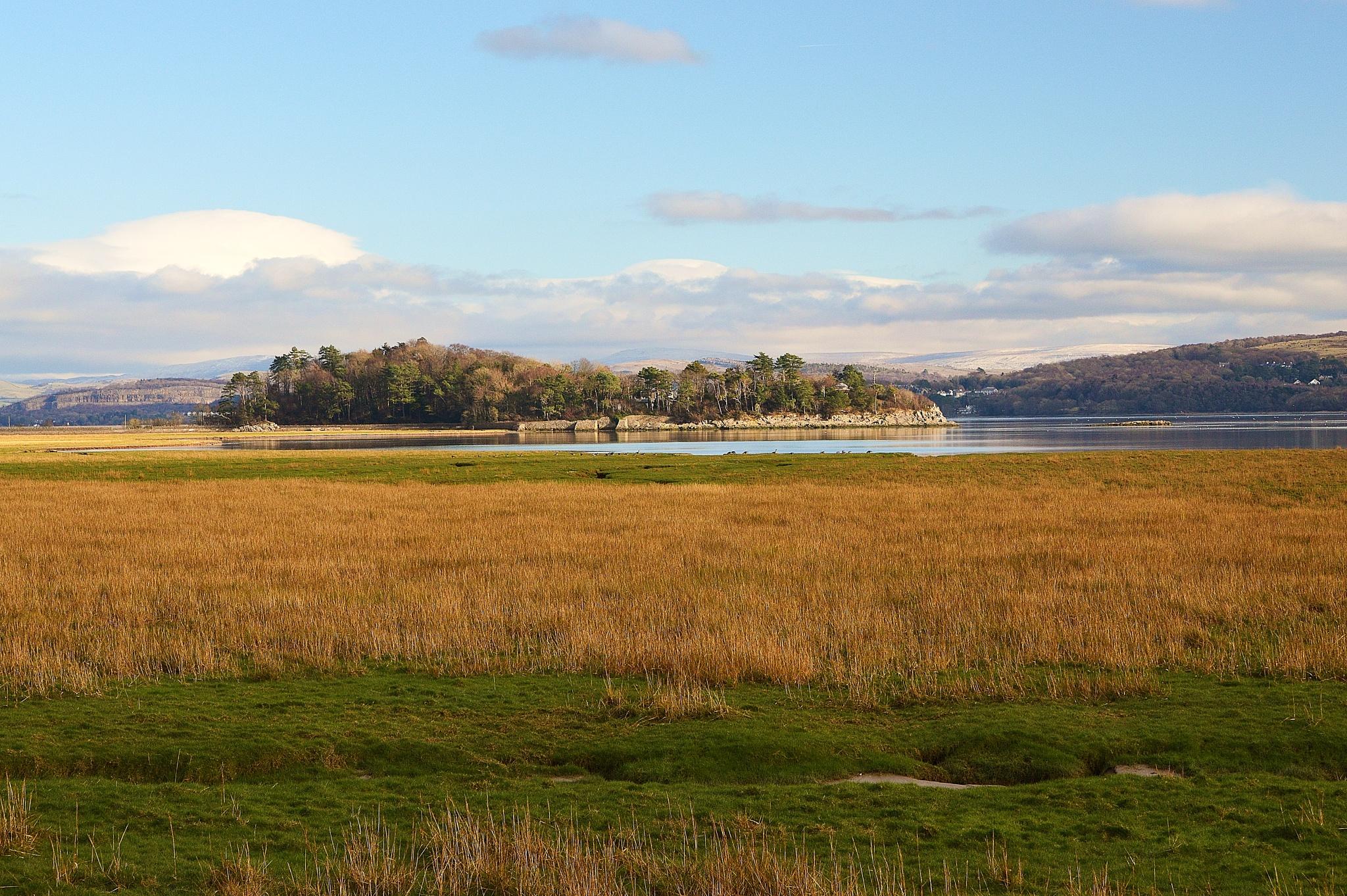 Holme Island  by Steve Wilkinson