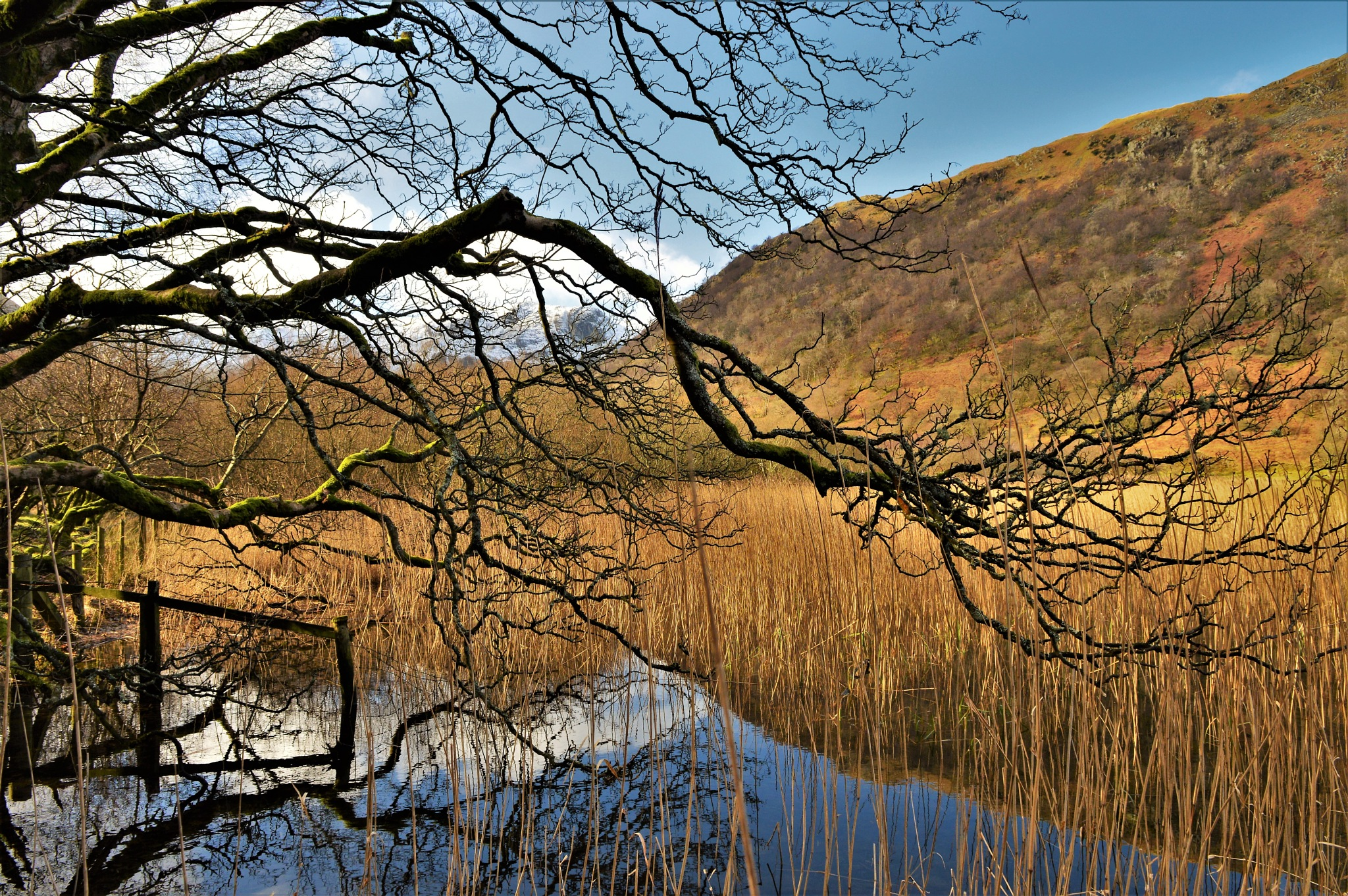 Reflections on Brotherswater by Steve Wilkinson