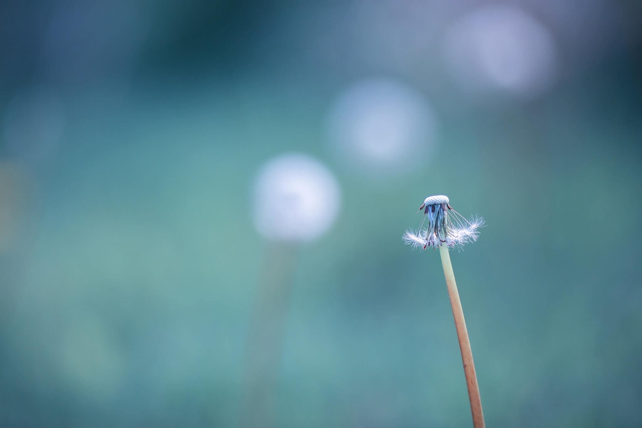 Summer Fairytale  by robertkuro