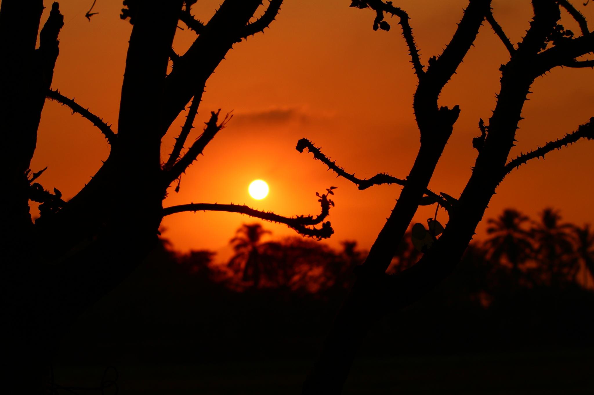 Pinball Sun by VeryOldSnake