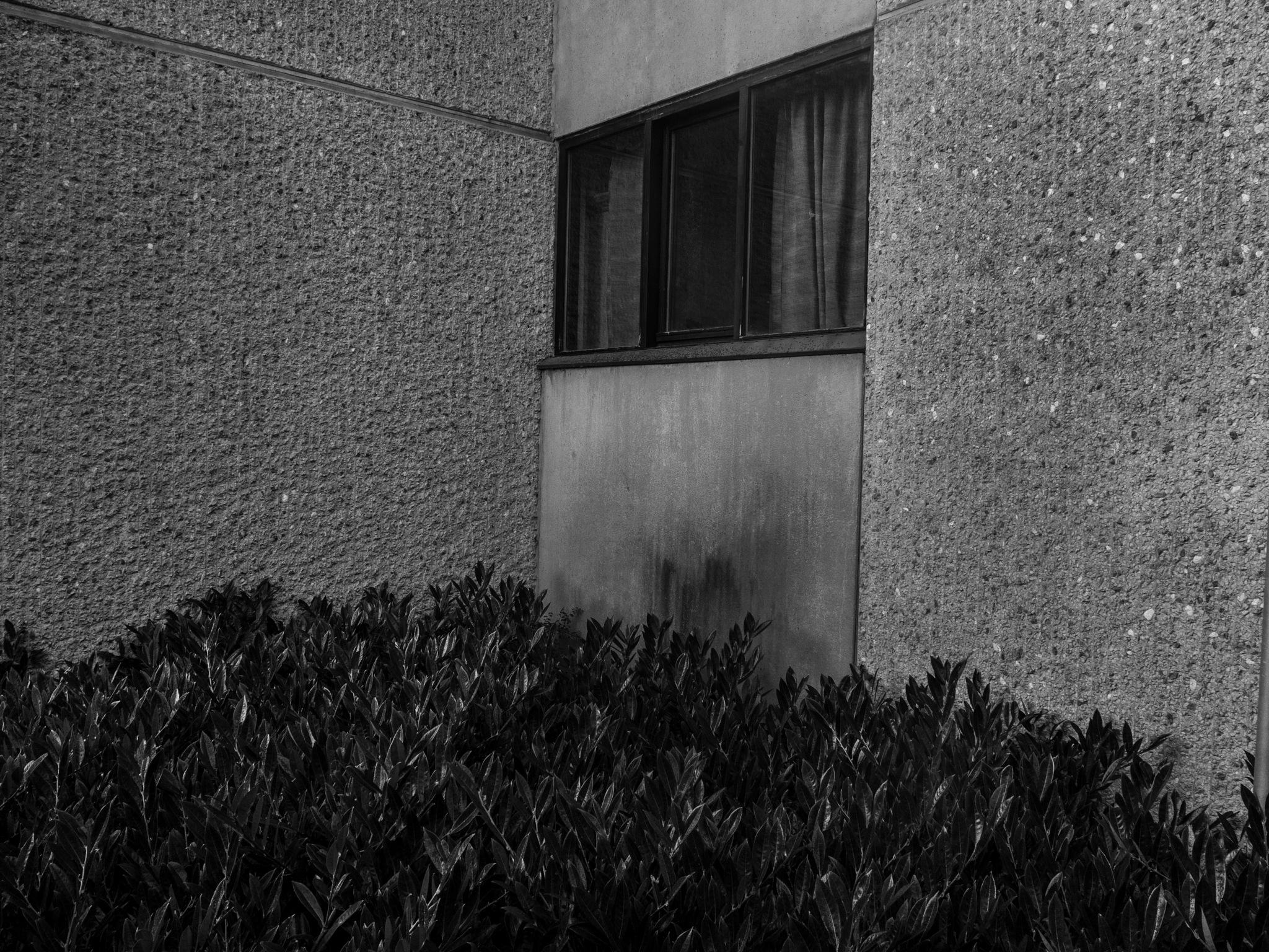 Window by lauraragnhof