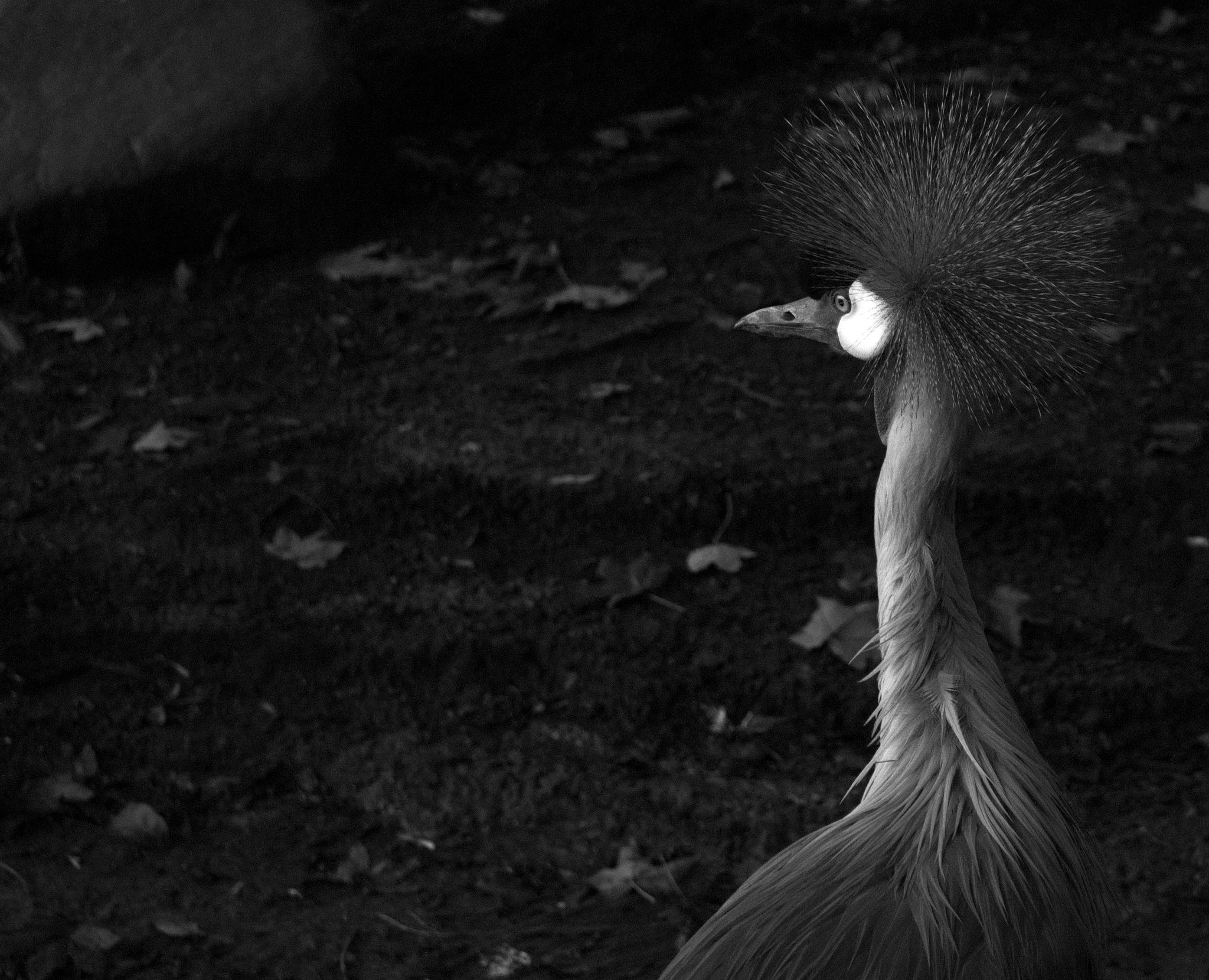 Bird by lauraragnhof