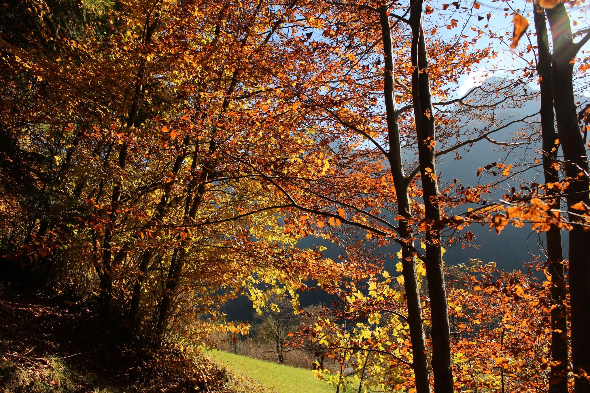 Nei boschi dell Val di Scalve BG by saraorler