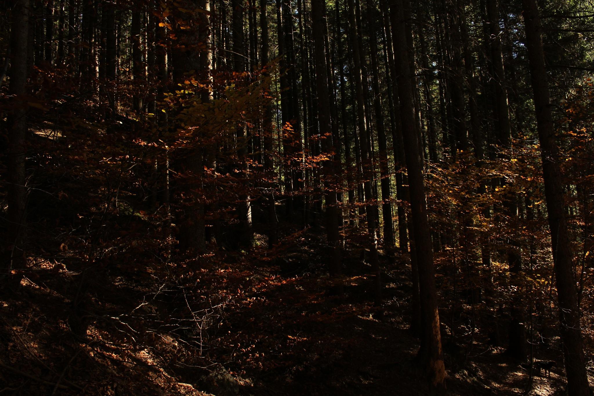Nei boschi della Val di Scalve BG by saraorler