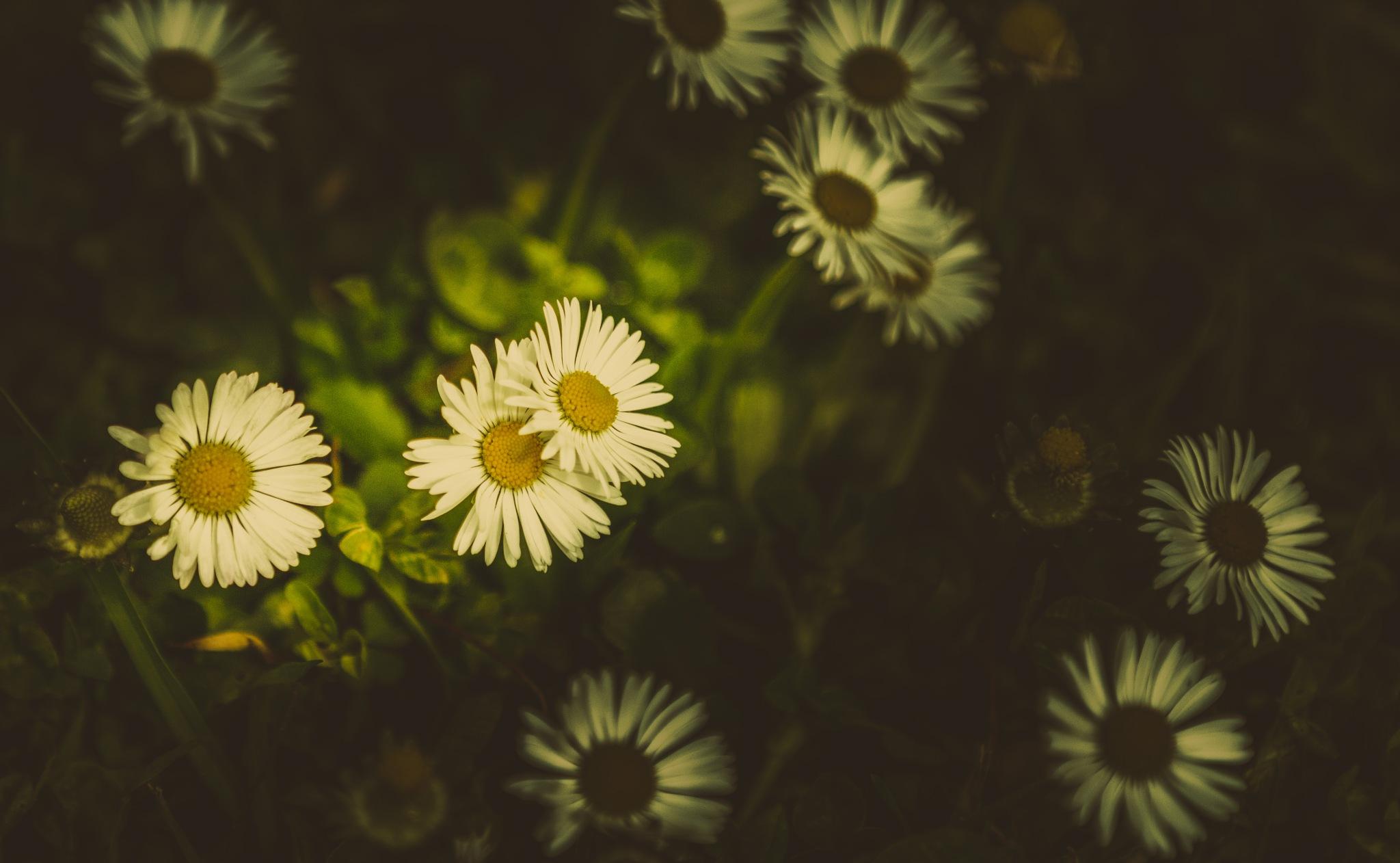 Flowers by Vítor Martins